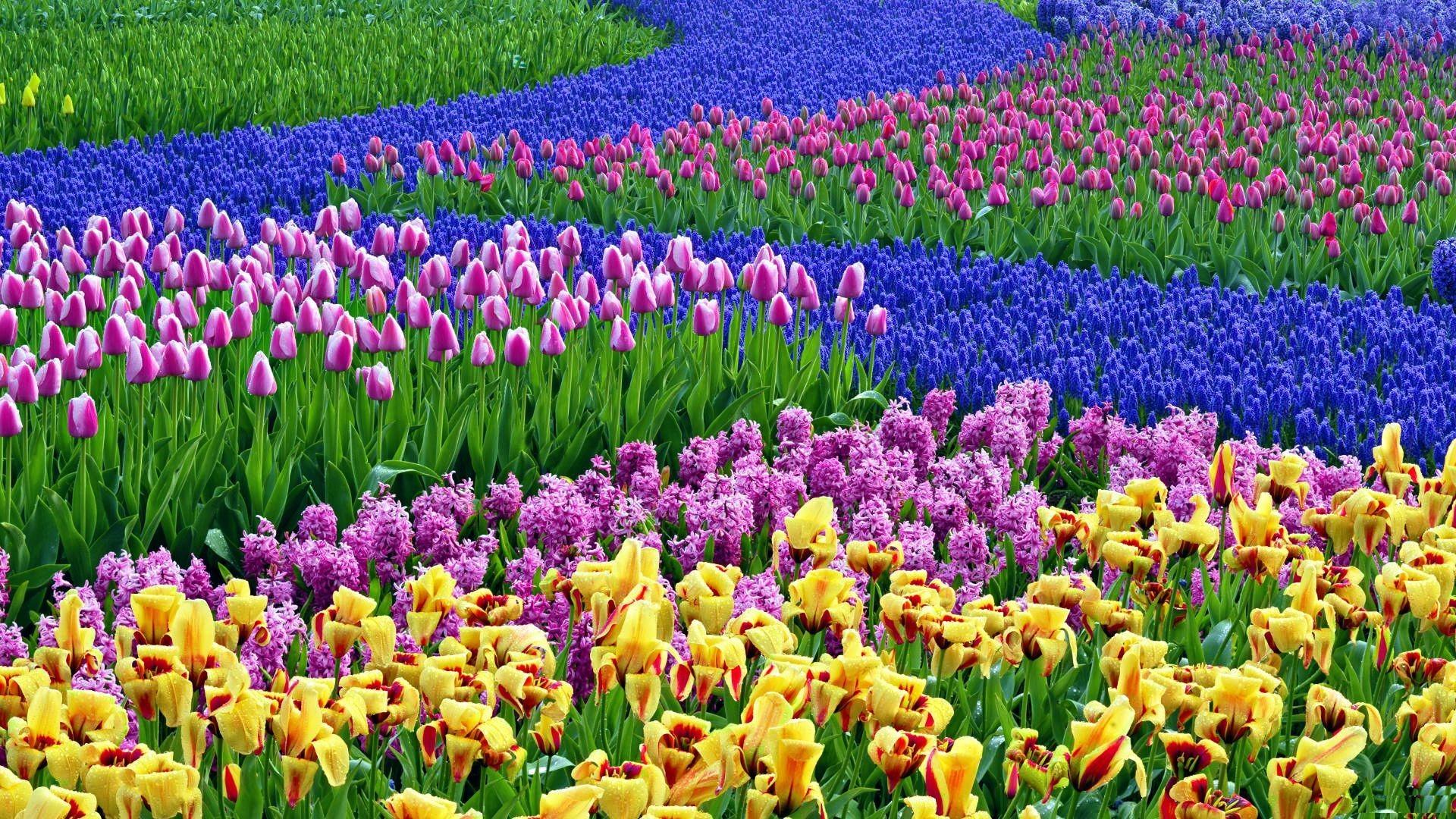 The 25 Best Flower Desktop Wallpaper Ideas On Pinterest - Spring Flower Desktop Background - HD Wallpaper