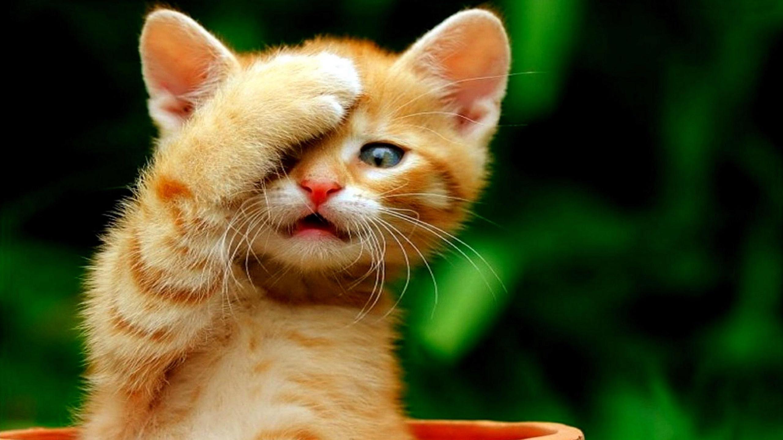Cute Cat Images Hd 2560x1440 Wallpaper Teahub Io