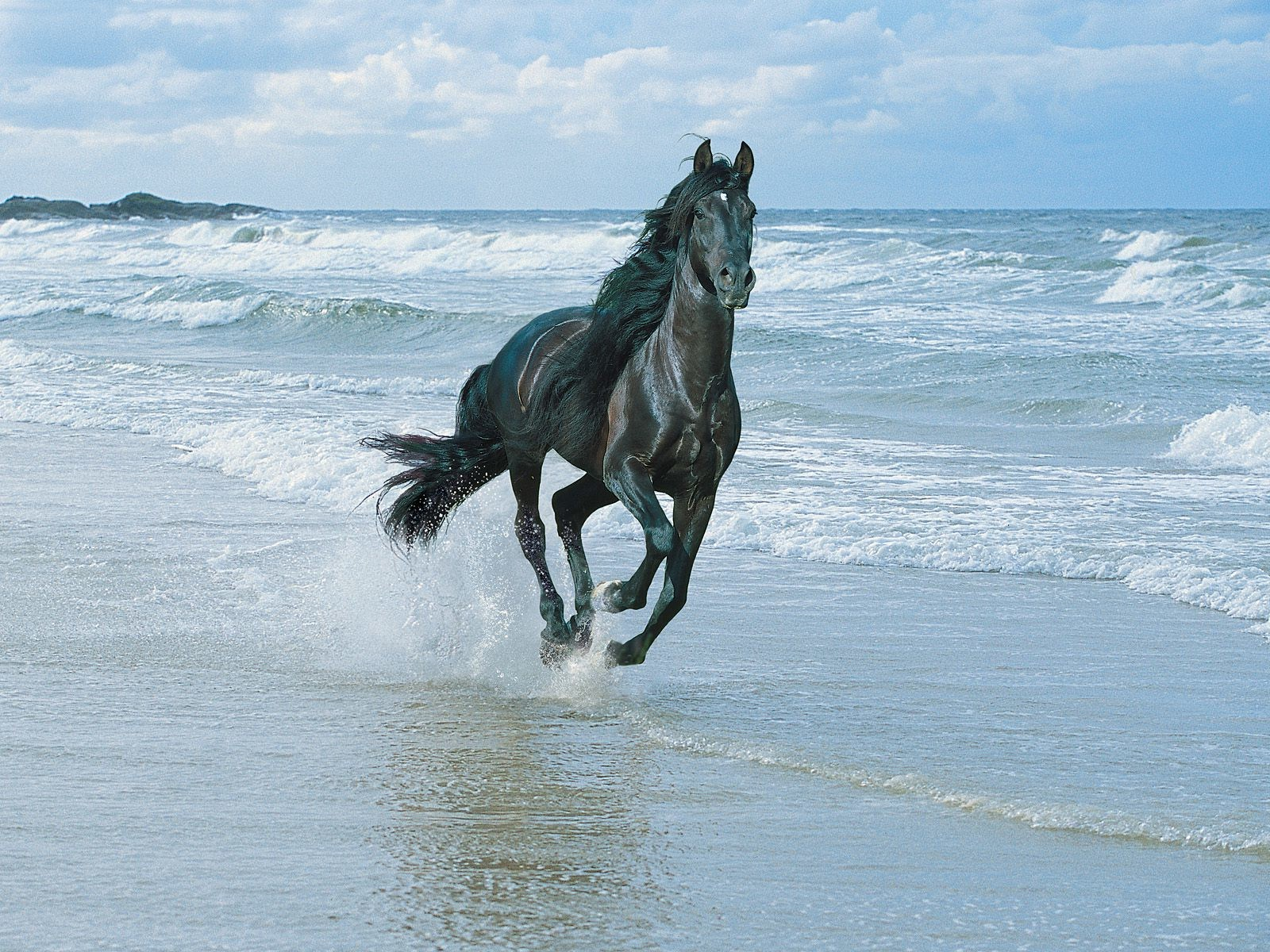Arabian Horse Background Free Download Running Horse In Water 1600x1200 Wallpaper Teahub Io