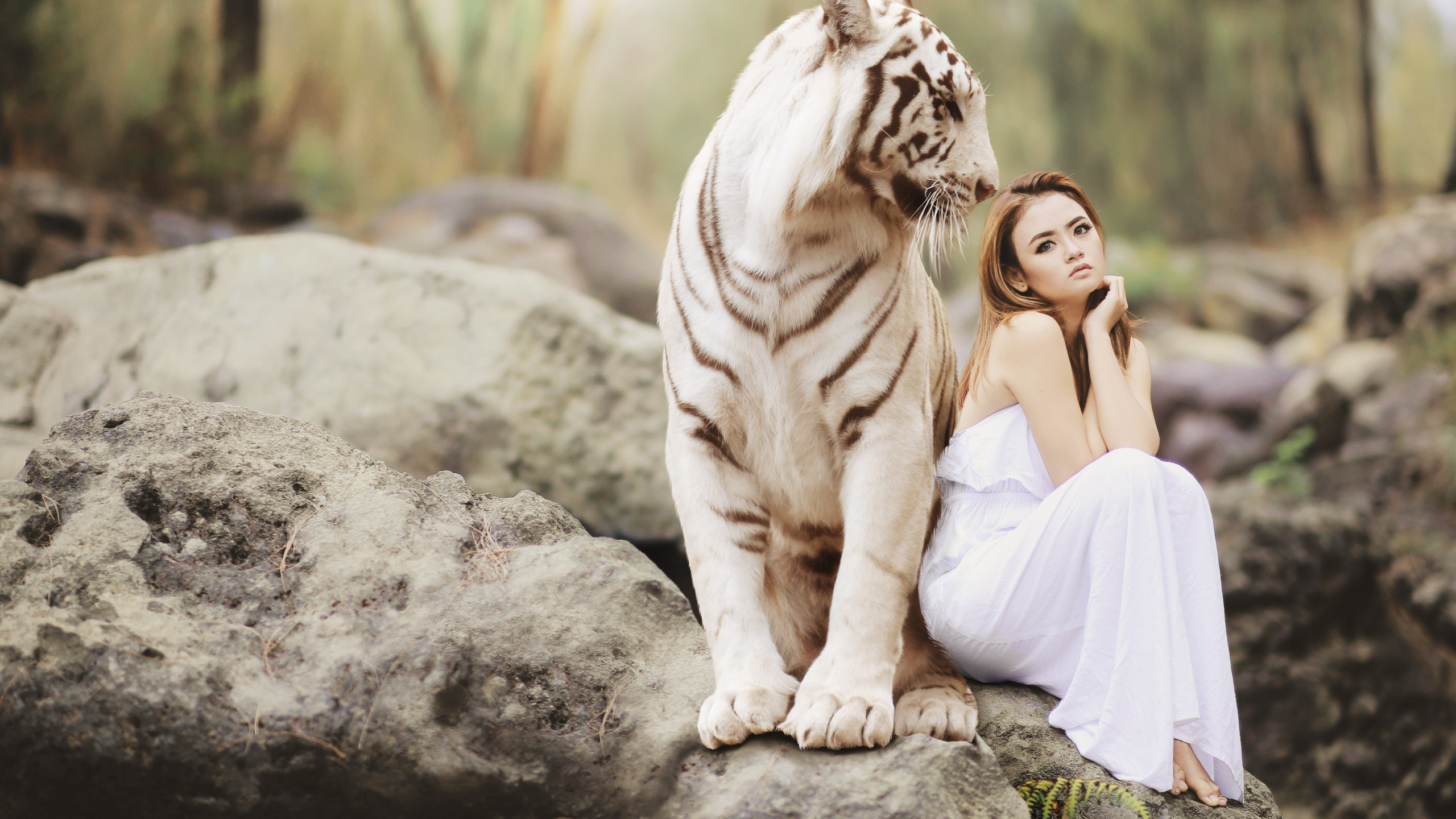 Bengal Tiger And A Beautiful Girl Wallpaper - Ultra Hd White Tiger 4k - HD Wallpaper