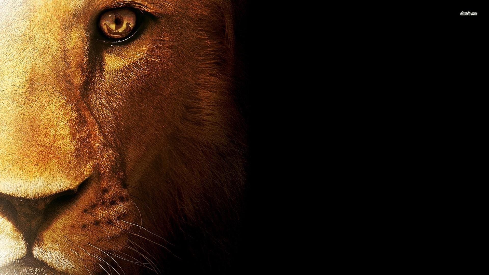 Lion Wallpapers Images Data-src - Hd ...