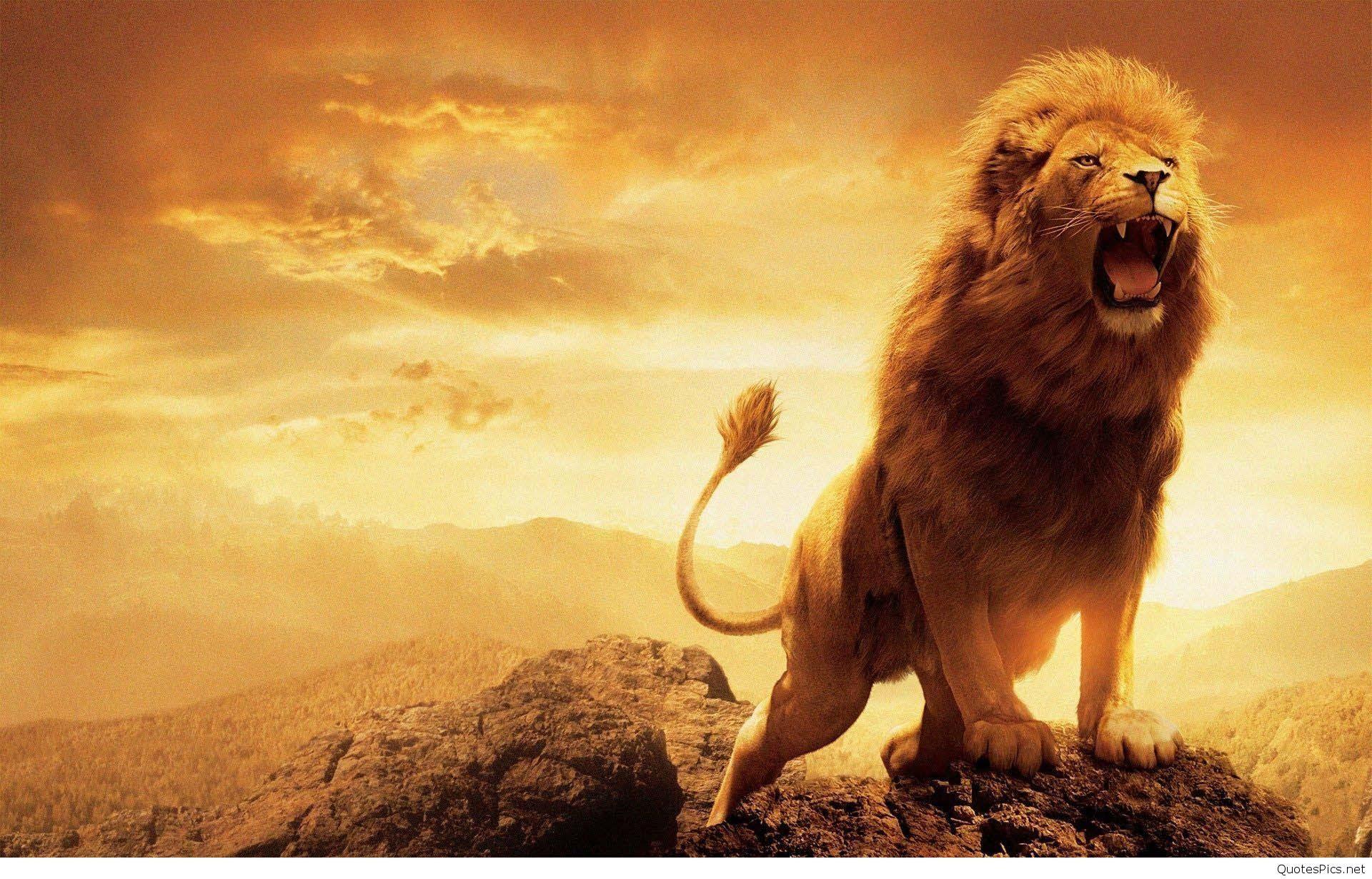 roaring lion wallpaper hd 1080p 1920x1230 wallpaper teahub io roaring lion wallpaper hd 1080p