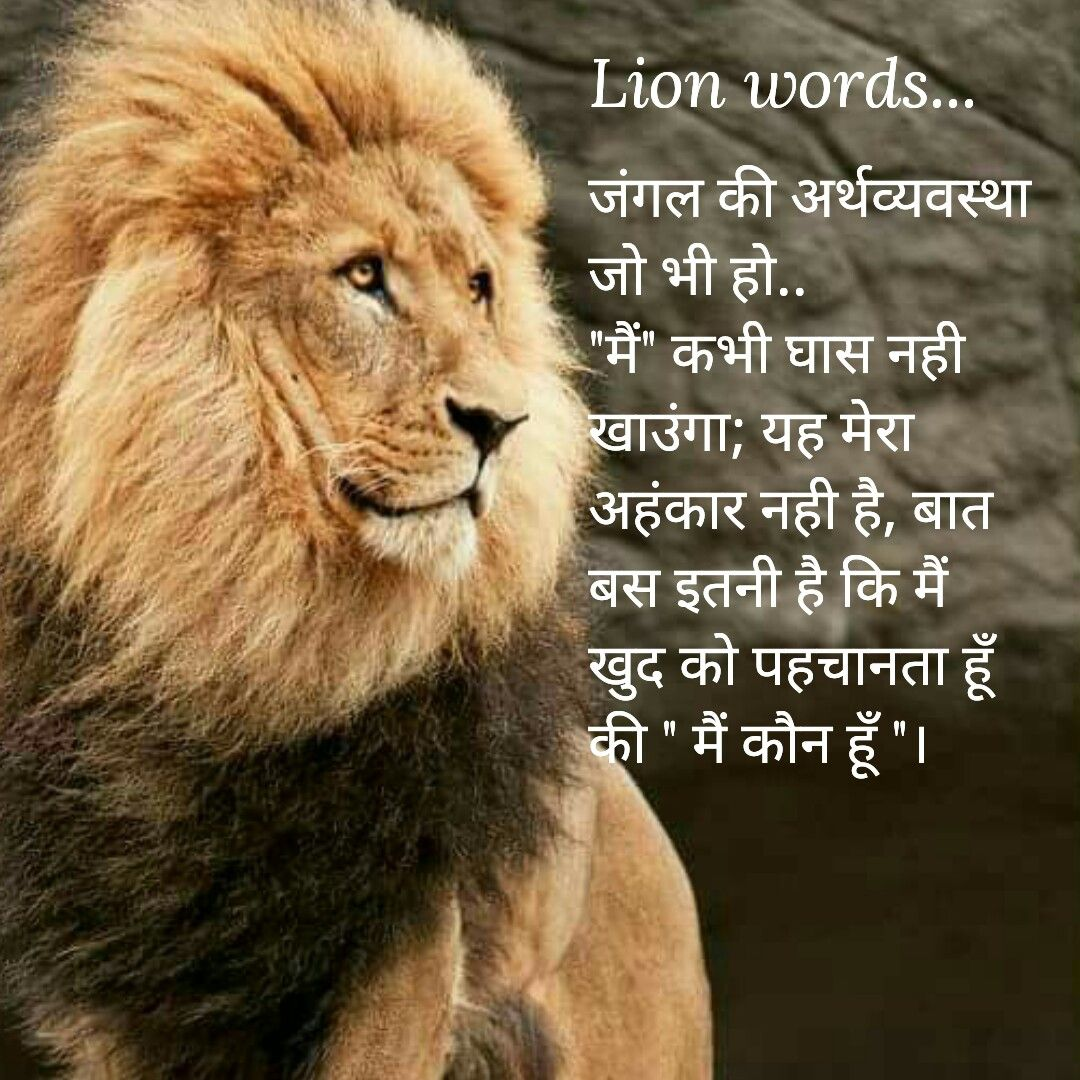 Lion Quotes In Hindi - HD Wallpaper