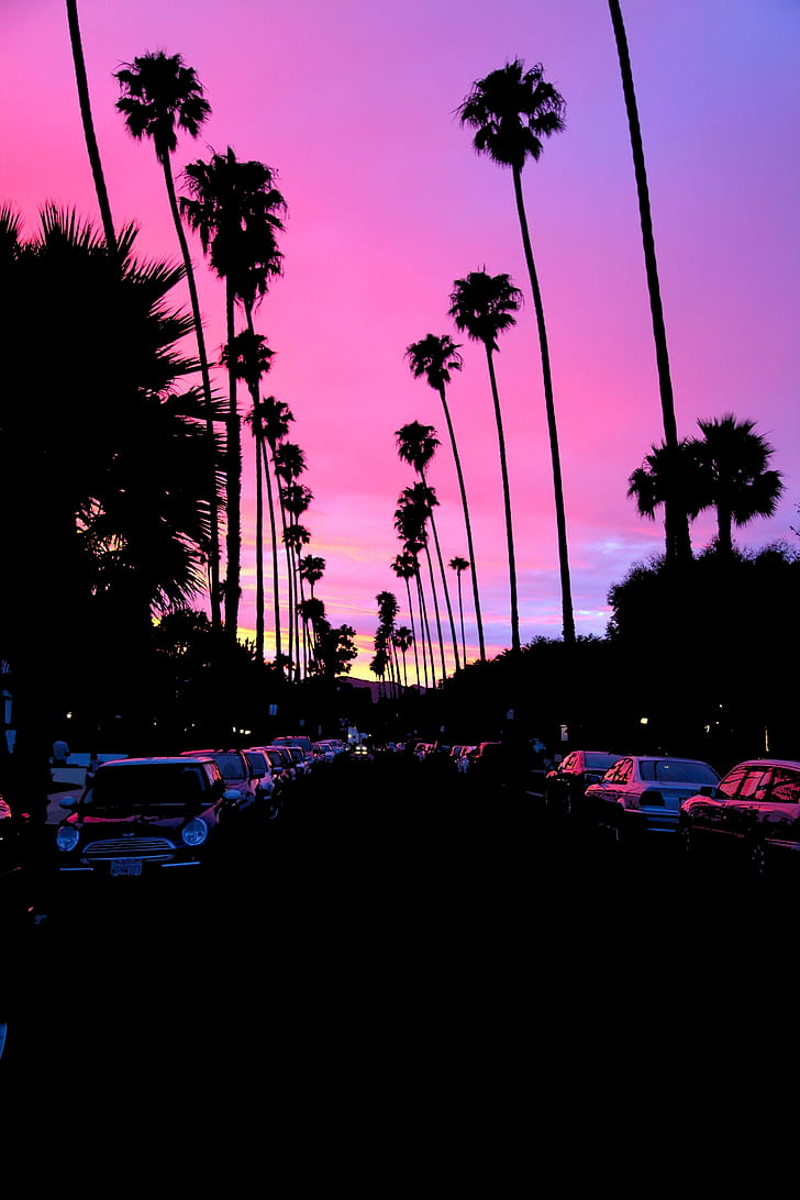 Sunset, Palm Trees, Road, Car, California, Dark, Hd - Palm Tree Road Sunset - HD Wallpaper