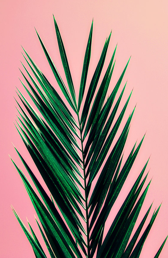 Palm Tree Leaves Pink - HD Wallpaper