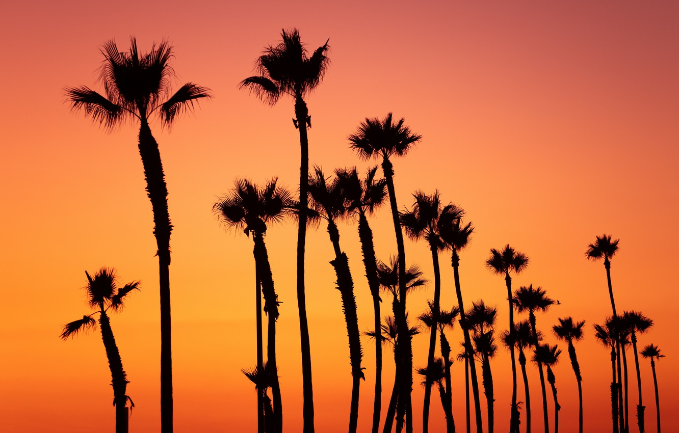 Photo Wallpaper Colorful, Twilight, Sky, Trees, Nature, - Palm Trees Orange Background - HD Wallpaper