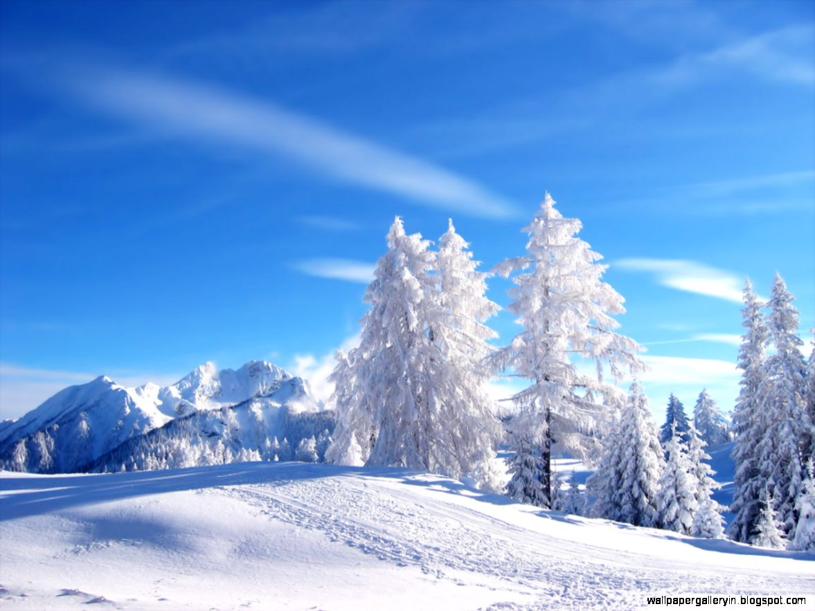 Freephotoz Daily Wallpapers Backgrounds Snow Trees - Snow Winter Nature - HD Wallpaper