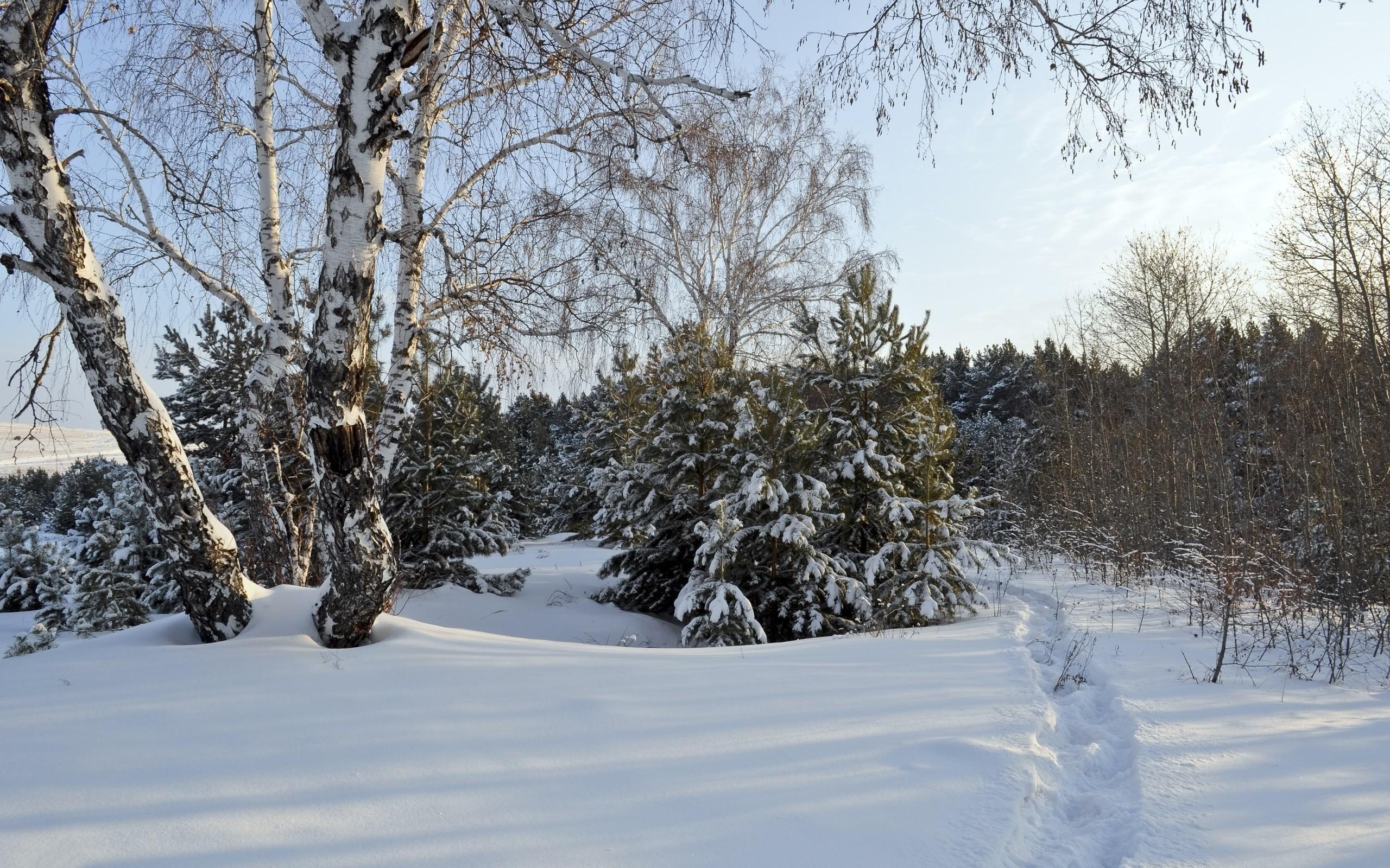 Snowy Trees [5] Wallpaper   Data Src Gorgerous Snowy - Snow - HD Wallpaper