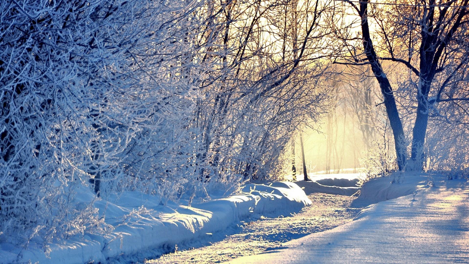 1920x1080, Snowy Winter Forest Wallpaper - Winter Background - HD Wallpaper
