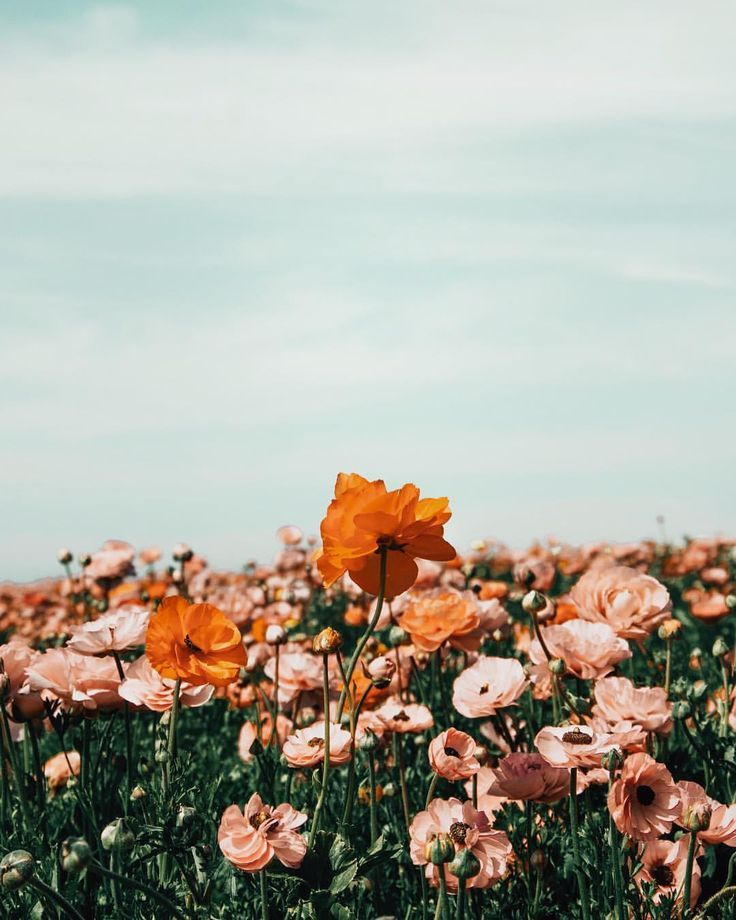 Flower Iphone Wallpapers, Iphone Flower Wallpaper 1080p, - Aesthetic Flower Wallpaper Iphone - HD Wallpaper