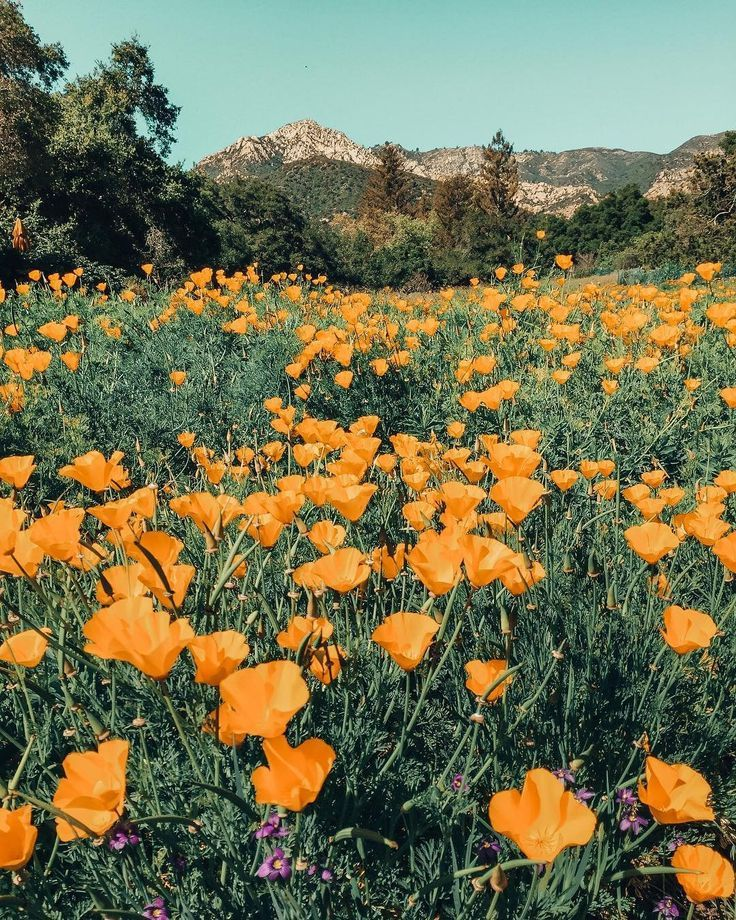 Flower Iphone Wallpapers, Iphone Flower Wallpaper 1080p, - Vsco Aesthetic Flowers - HD Wallpaper