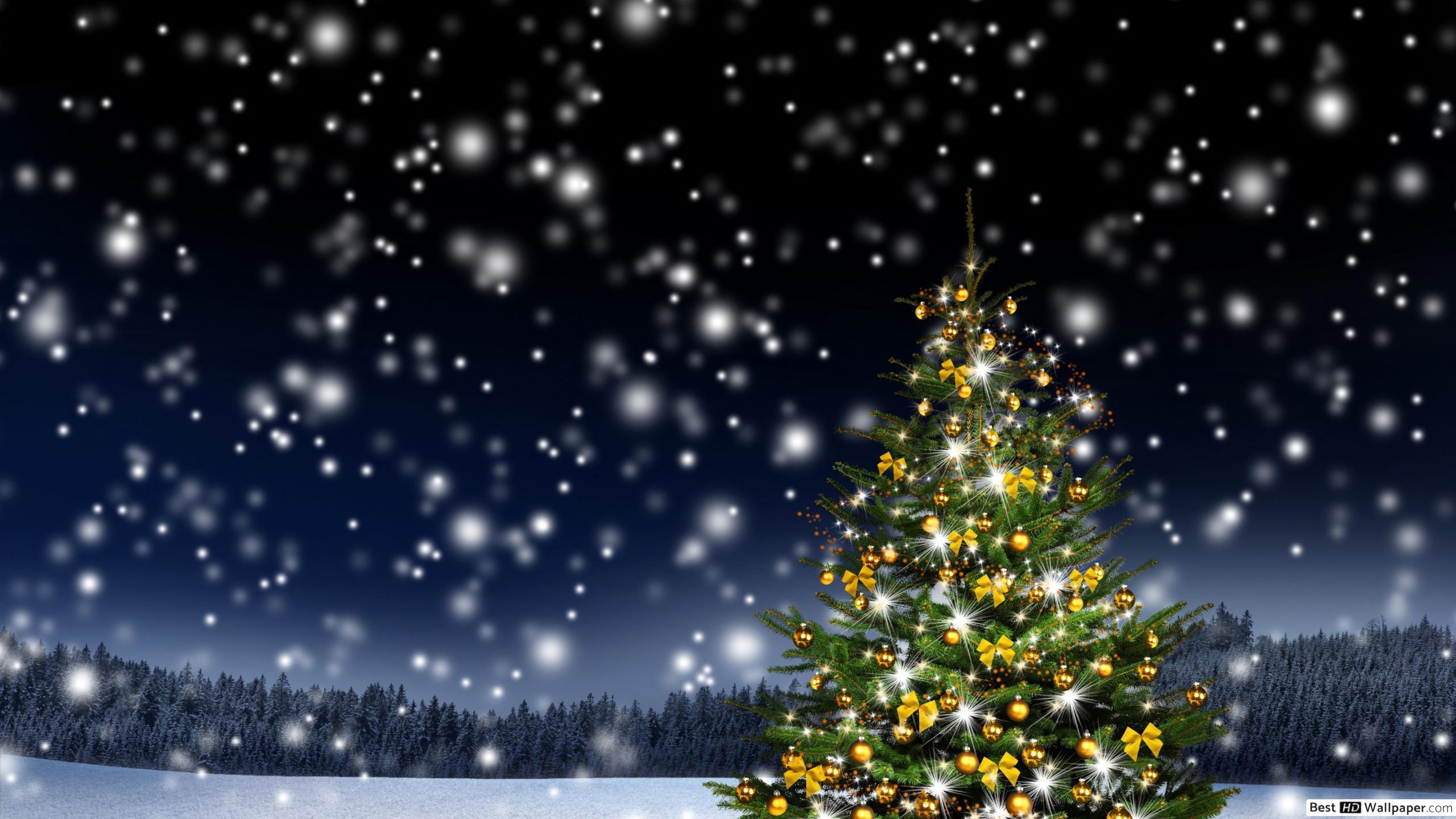 Snow And Christmas Lights 2560x1440 Wallpaper Teahub Io