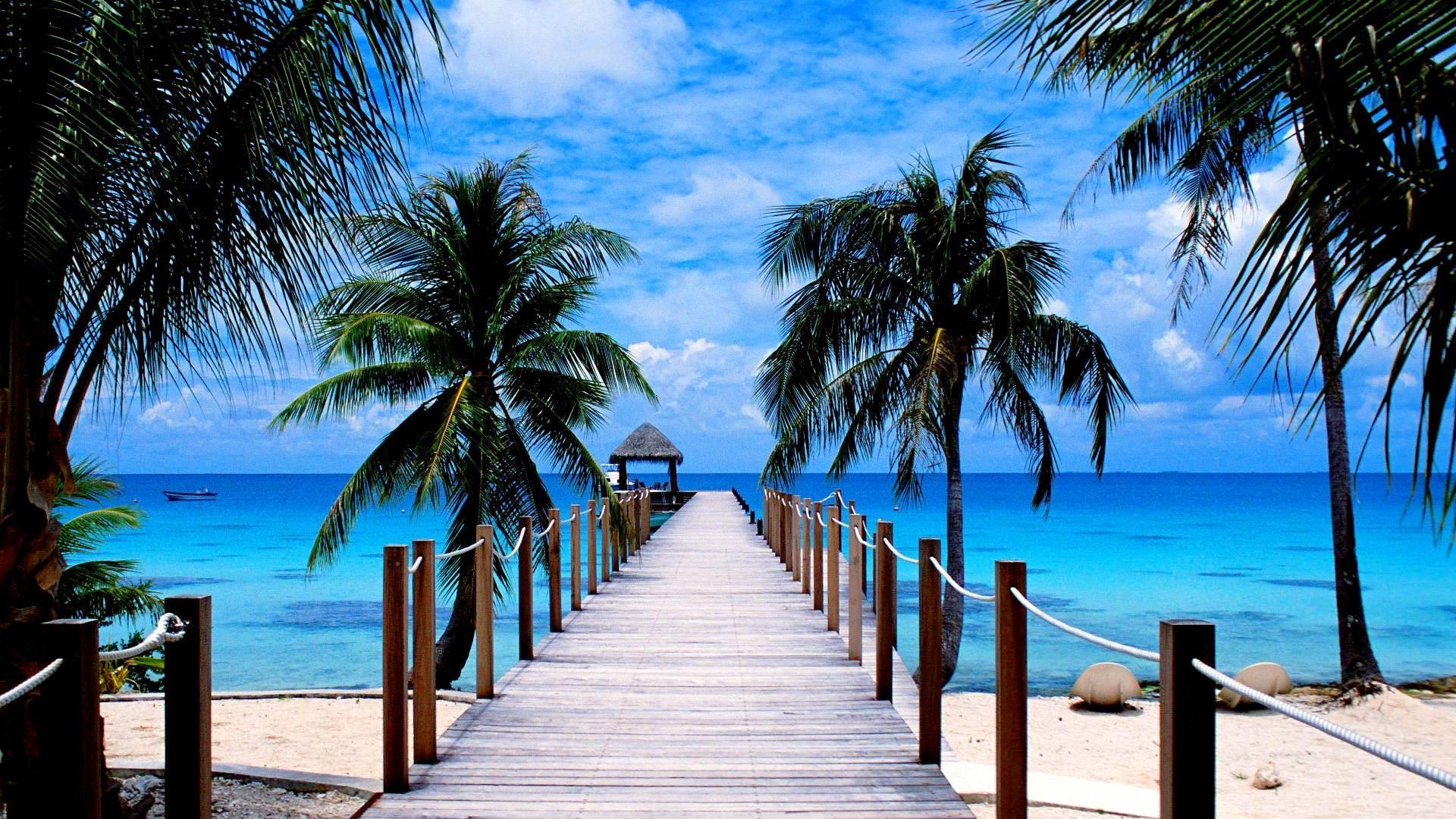 Pier Tropical Ocean Palm Tree Horizon Wallpaper   Data-src - Summer Beach Backgrounds - HD Wallpaper