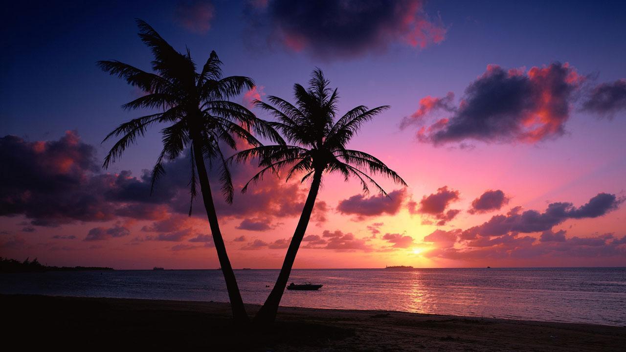 Beach Sunset Live Wallpaper - Beach Sunset With Palm Trees - HD Wallpaper