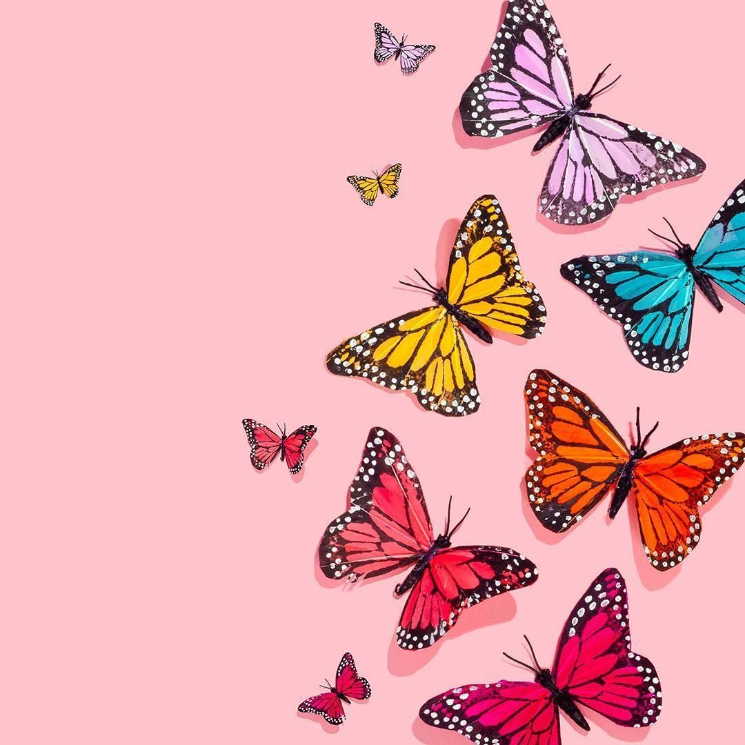 Android Iphone Desktop Hd Backgrounds Wallpapers Backgrounds Aesthetic Butterfly 1080x1080 Wallpaper Teahub Io
