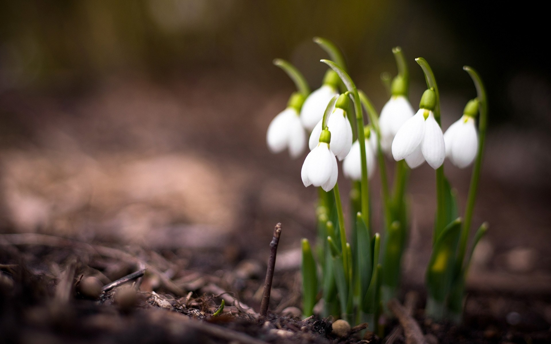 Spring Flowers Nature - HD Wallpaper