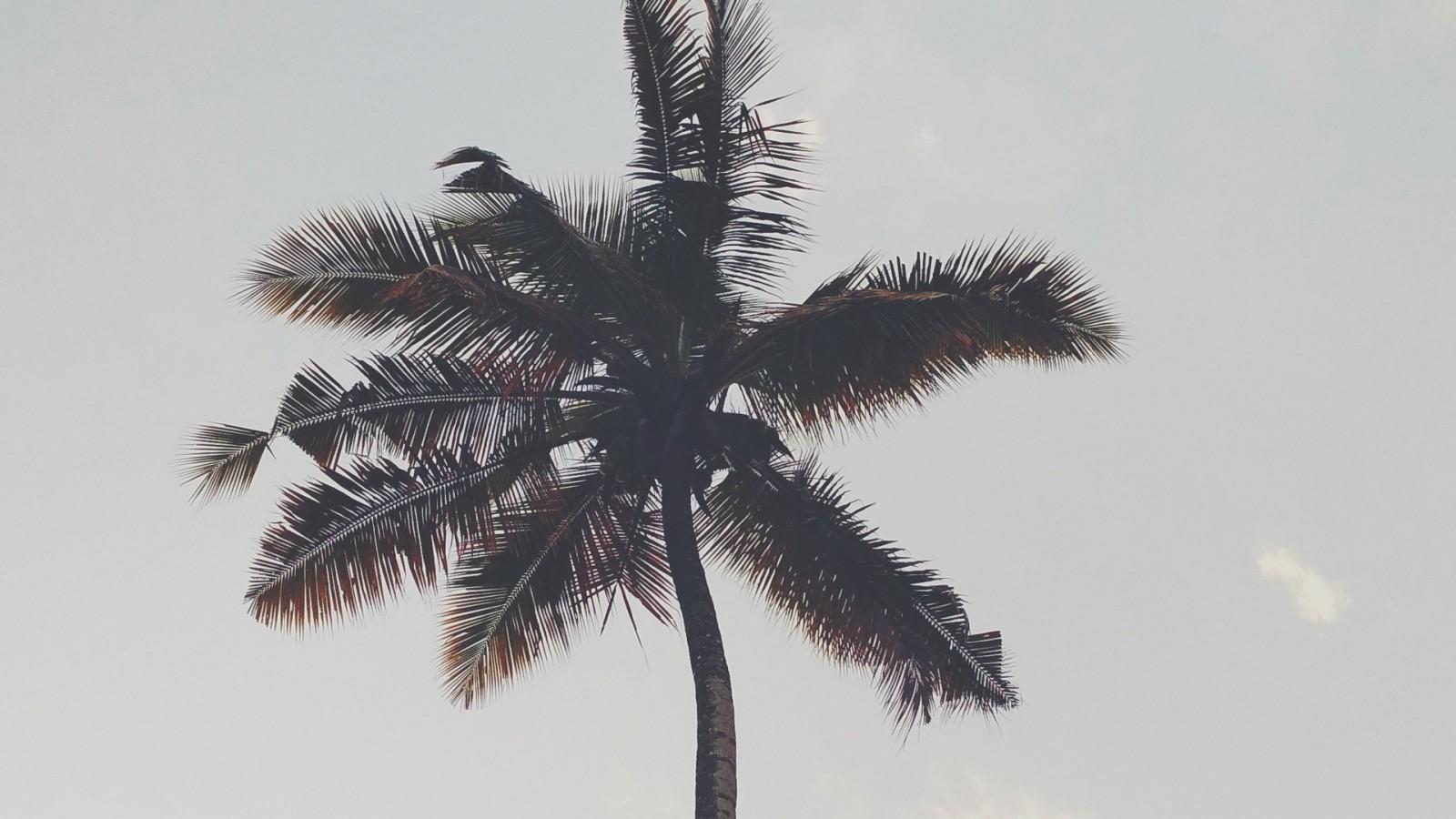 Palms Tree Iphone X - HD Wallpaper