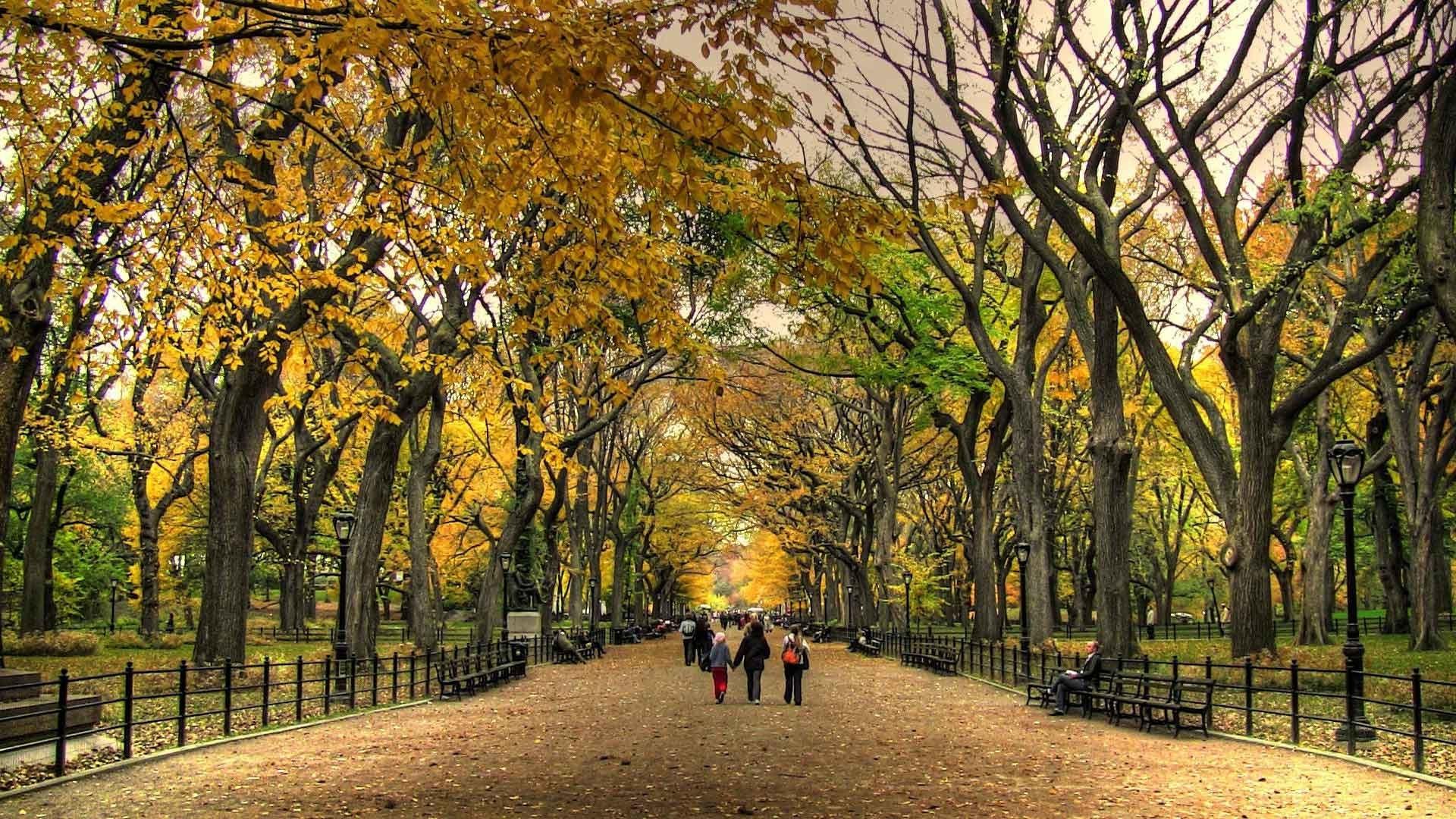 Landscapes Nature Landscape Beauty Autumn Central Park - Central Park Fall Desktop - HD Wallpaper