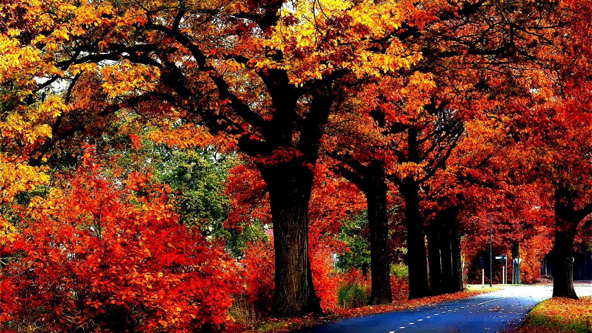 1920x1080, Tree Leaves Autumn Fall Nature Landscape - Fall Hd Wallpapers 1080p - HD Wallpaper