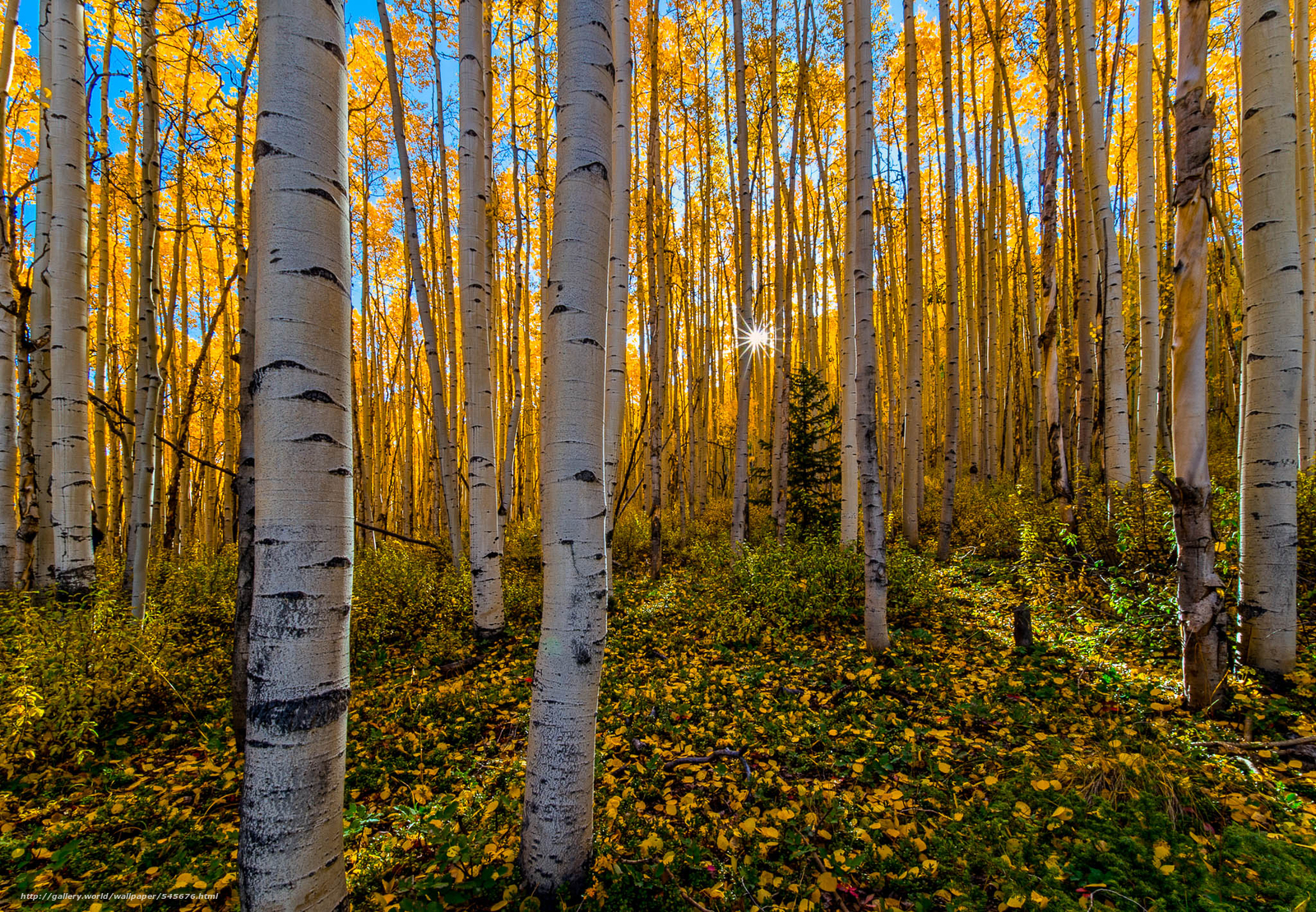 Download Wallpaper Autumn, Fall Color, Forest, Colorado - High Resolution Beautiful Background - HD Wallpaper