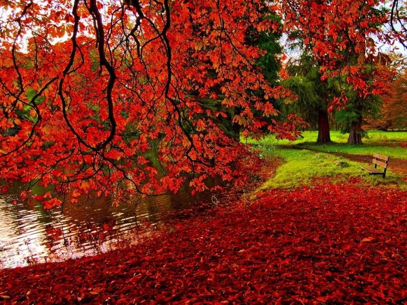 Beautiful Autumn Wallpapers Most Beautiful Places In - Romantic Natural Beautiful Scenery - HD Wallpaper