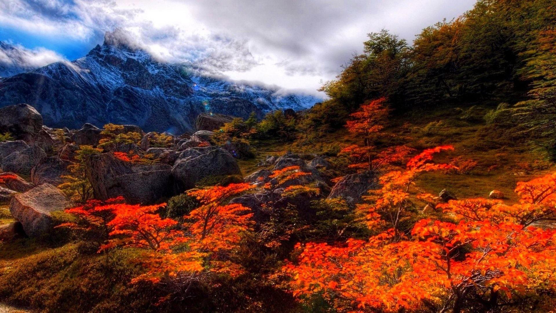 Nature Color Landscape Season Tree Fall Forest Autumn - Fall Forest Desktop Background - HD Wallpaper