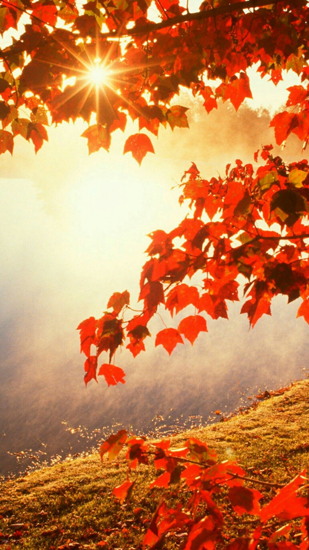 Autumn Background For Android ...