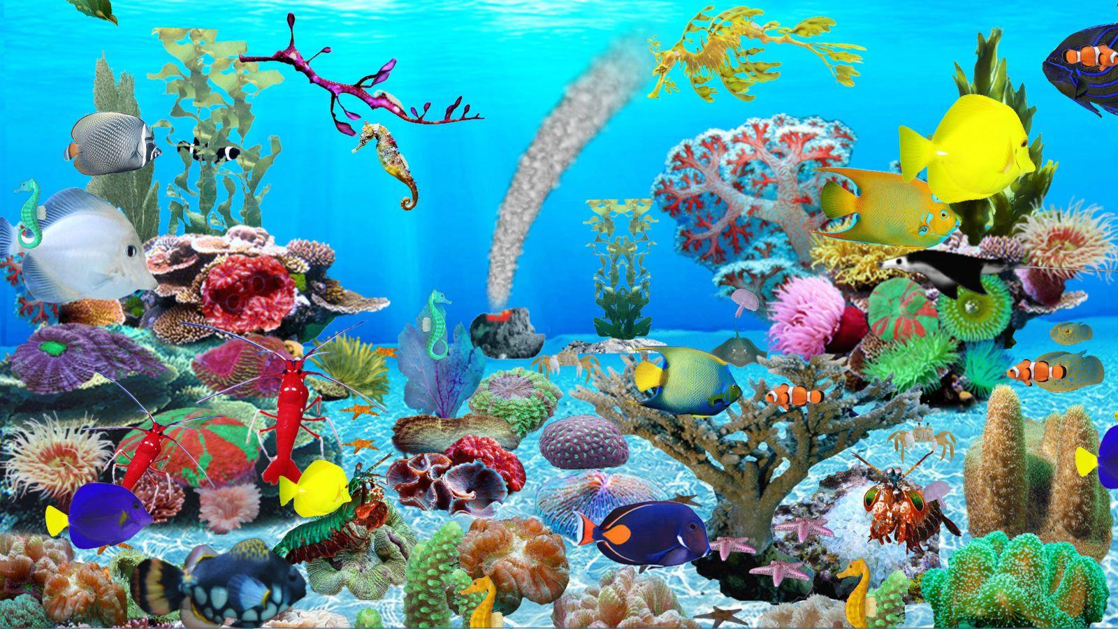 Fond D Ecran Pc Aquarium Gratuit Anime 1600x900 Wallpaper Teahub Io