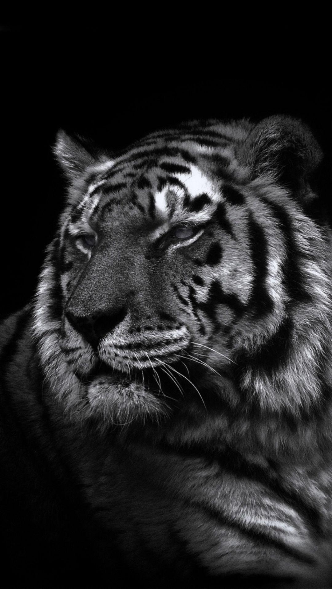 Black Tiger Wallpaper Iphone 1080x1917 Wallpaper Teahub Io