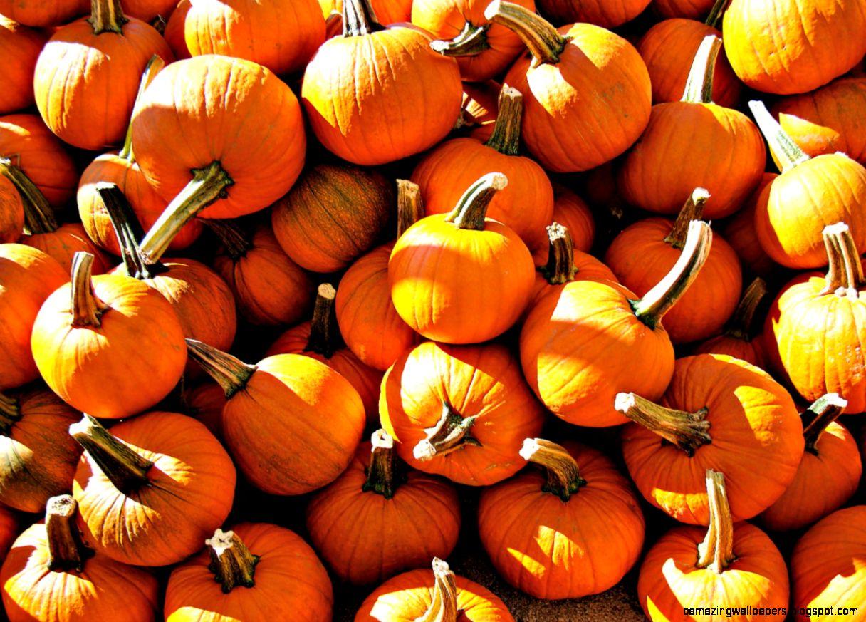 For The Love Of Autumn Autumn Wallpaper Tumblr Pumpkin Cute 1216x873 Wallpaper Teahub Io