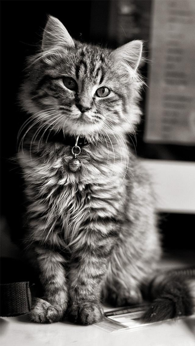 Iphone 6 Cute Cat Wallpaper Hd 640x1136 Wallpaper Teahub Io