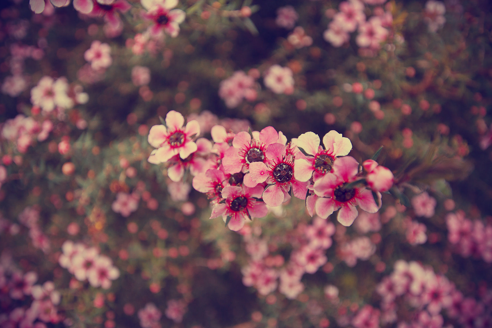 1000 Images About Flowers On Pinterest - HD Wallpaper