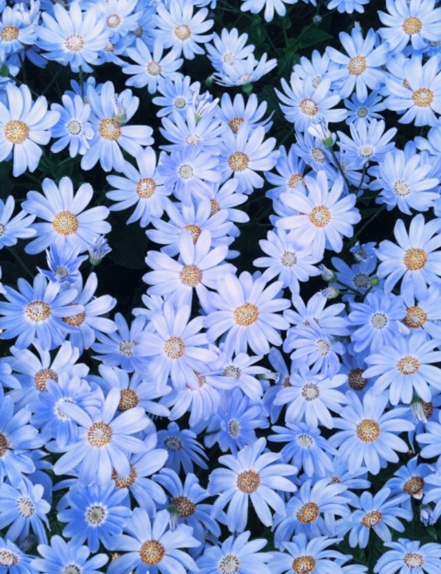 Flowers, Wallpaper, And Blue Image - Blue Flower Tumblr Background - HD Wallpaper