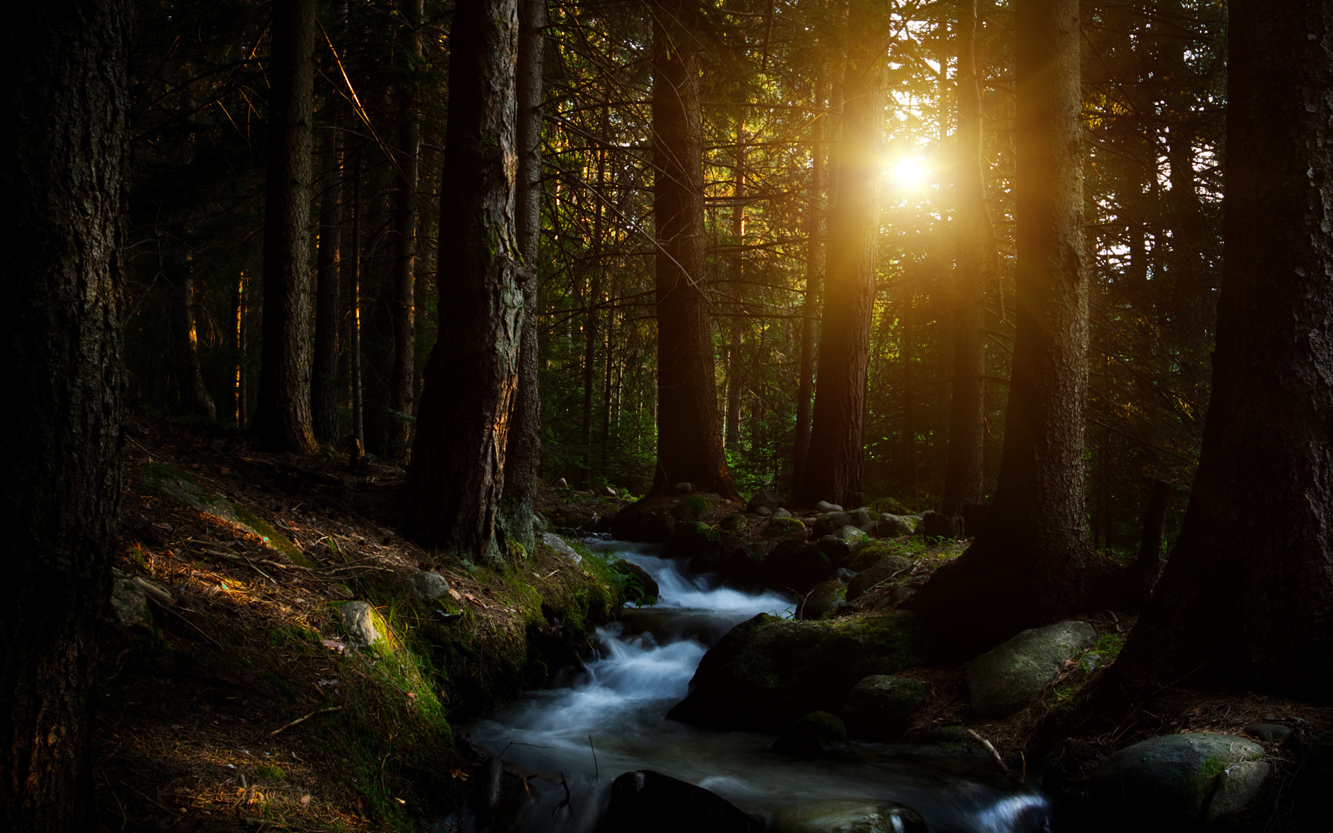 Widescreen S - Beautiful Dark Forest Background Hd - HD Wallpaper