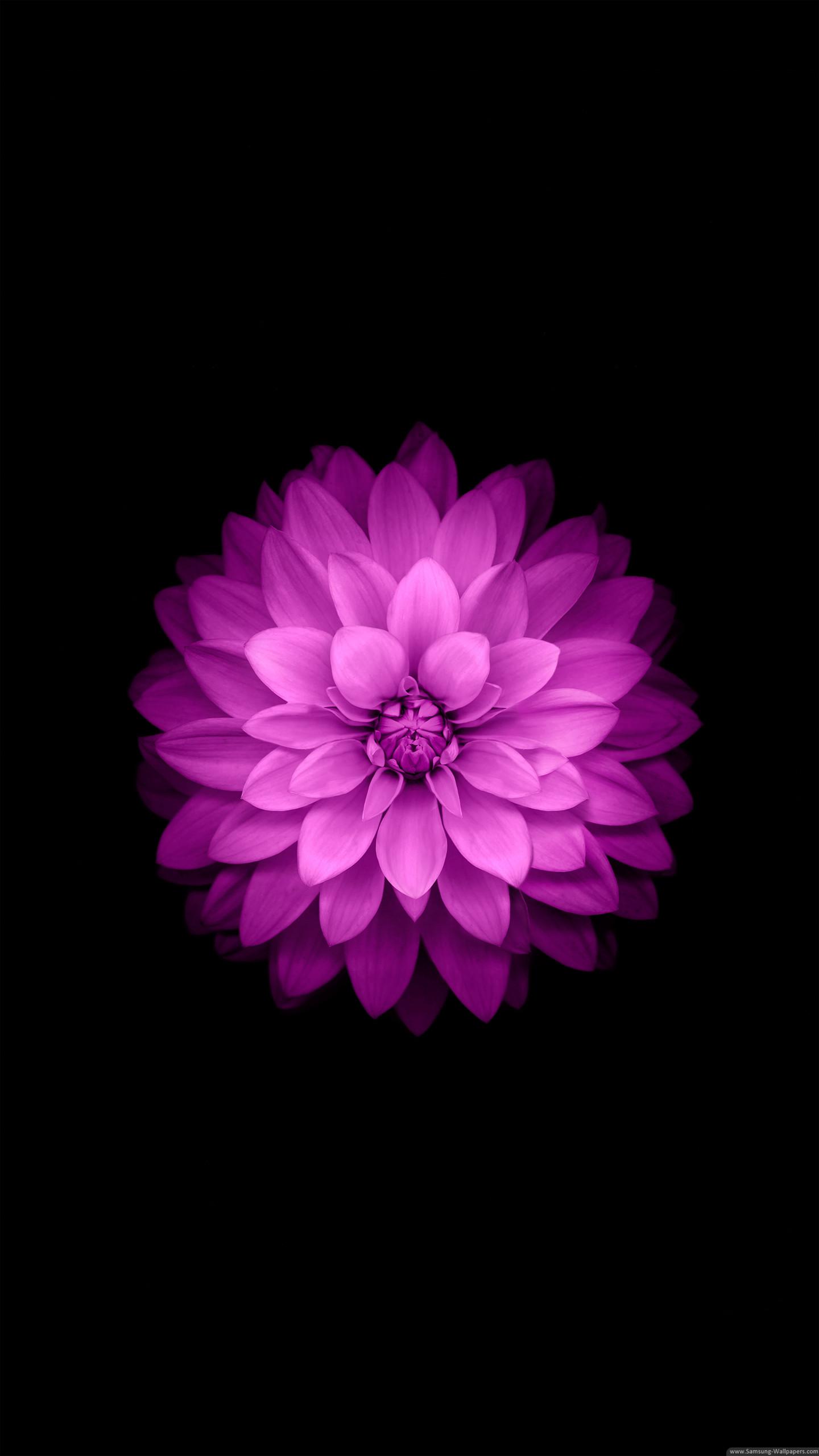 Iphone6 Plus Official Lock Screen Samsung Galaxy S6 Flower Wallpaper Iphone 1440x2560 Wallpaper Teahub Io