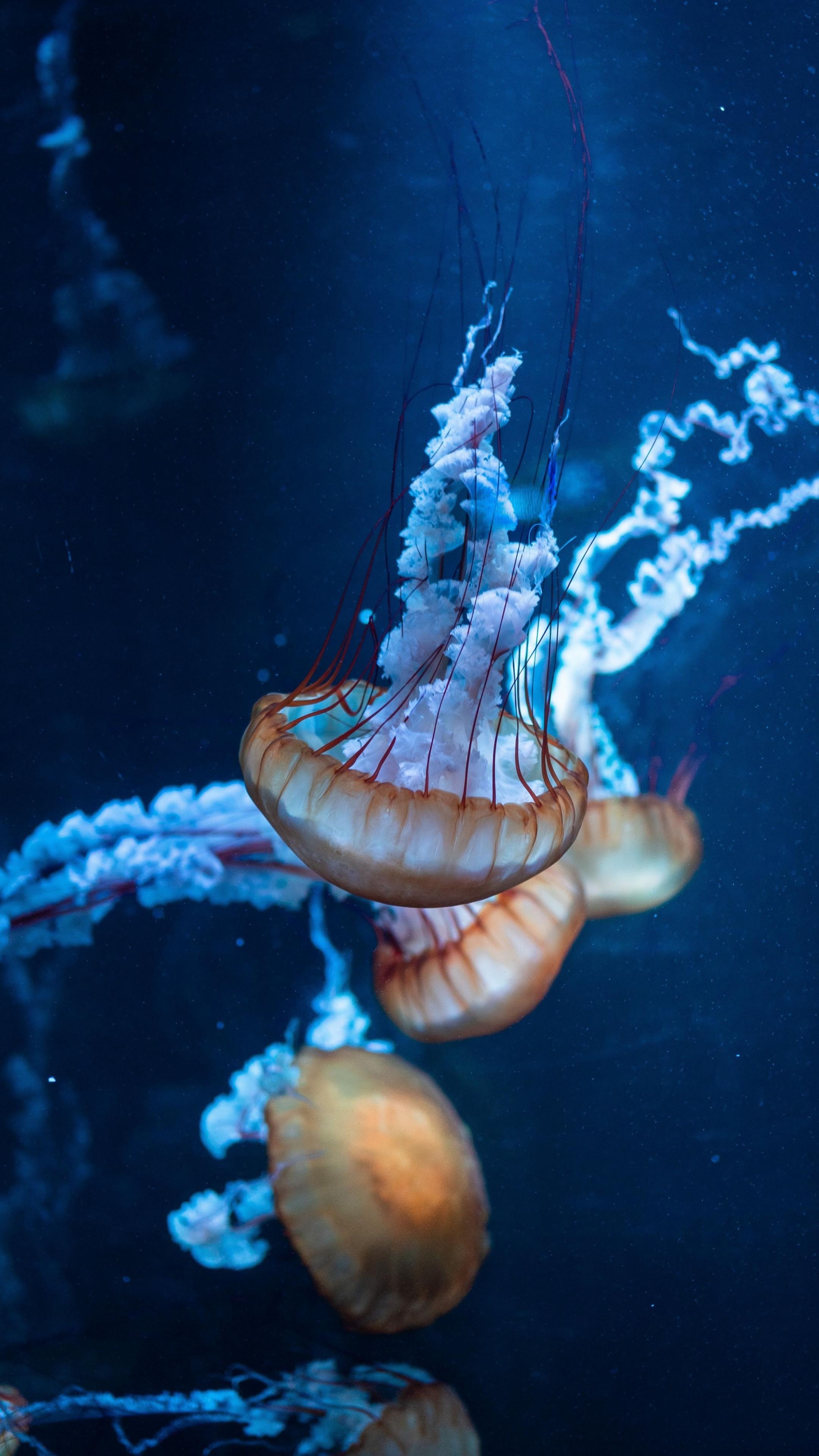 Jellyfish Underwater Aquatic Animals Wallpaper Iphone Jellyfish Background 2160x3840 Wallpaper Teahub Io