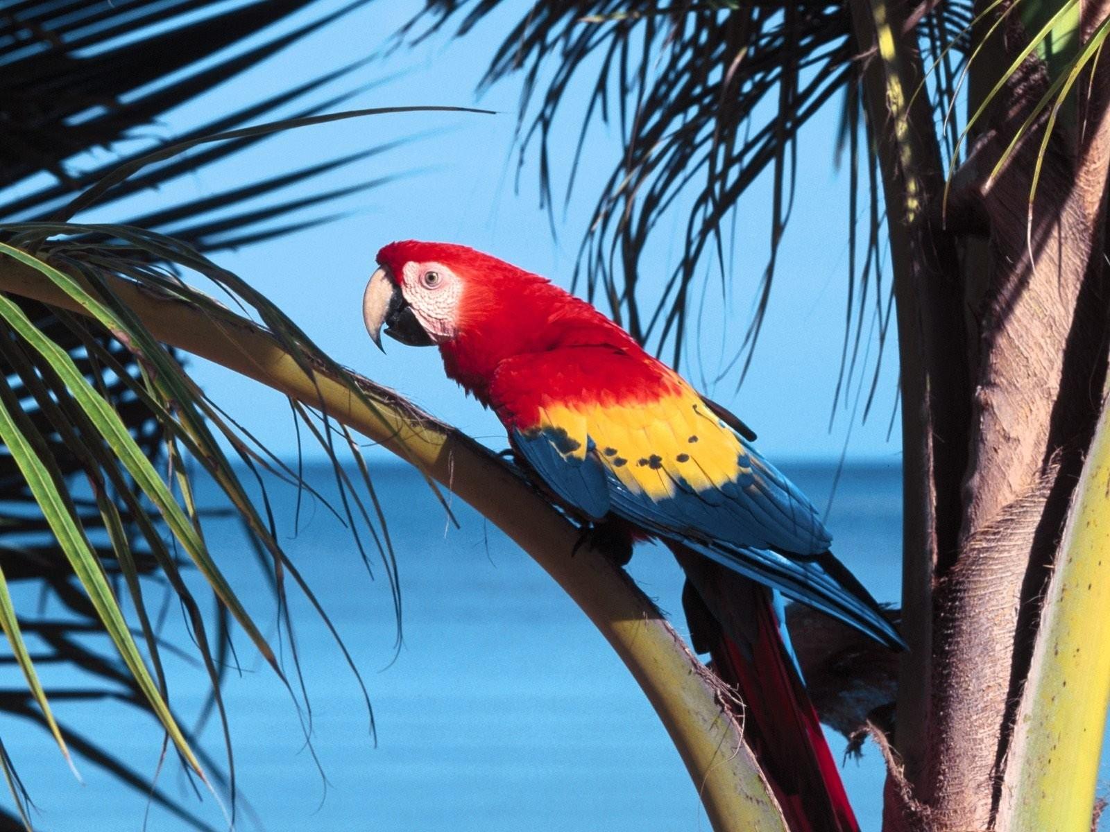 Tropical Birds On The Beach - HD Wallpaper