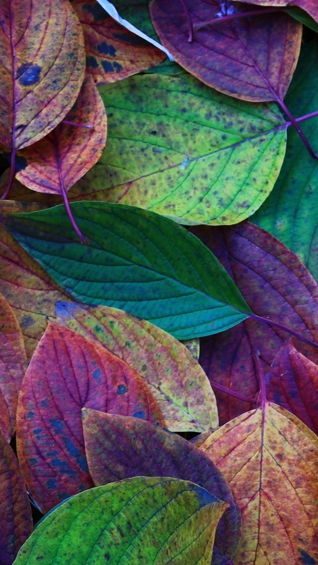 Iphone Wallpaper Autumn Leaves Green Purple Red Scentsy Cover Photos 2019 640x1136 Wallpaper Teahub Io