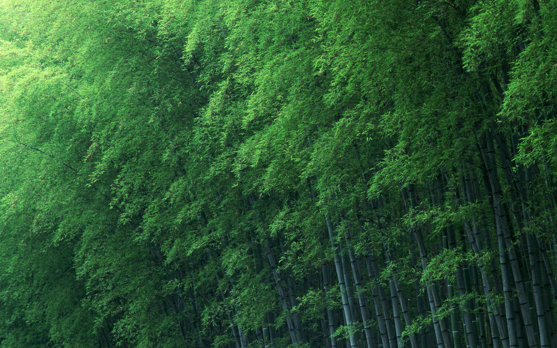 Photo Wallpaper Trees, Green, Bamboo - Macbook Wallpaper Bamboo Forest - HD Wallpaper