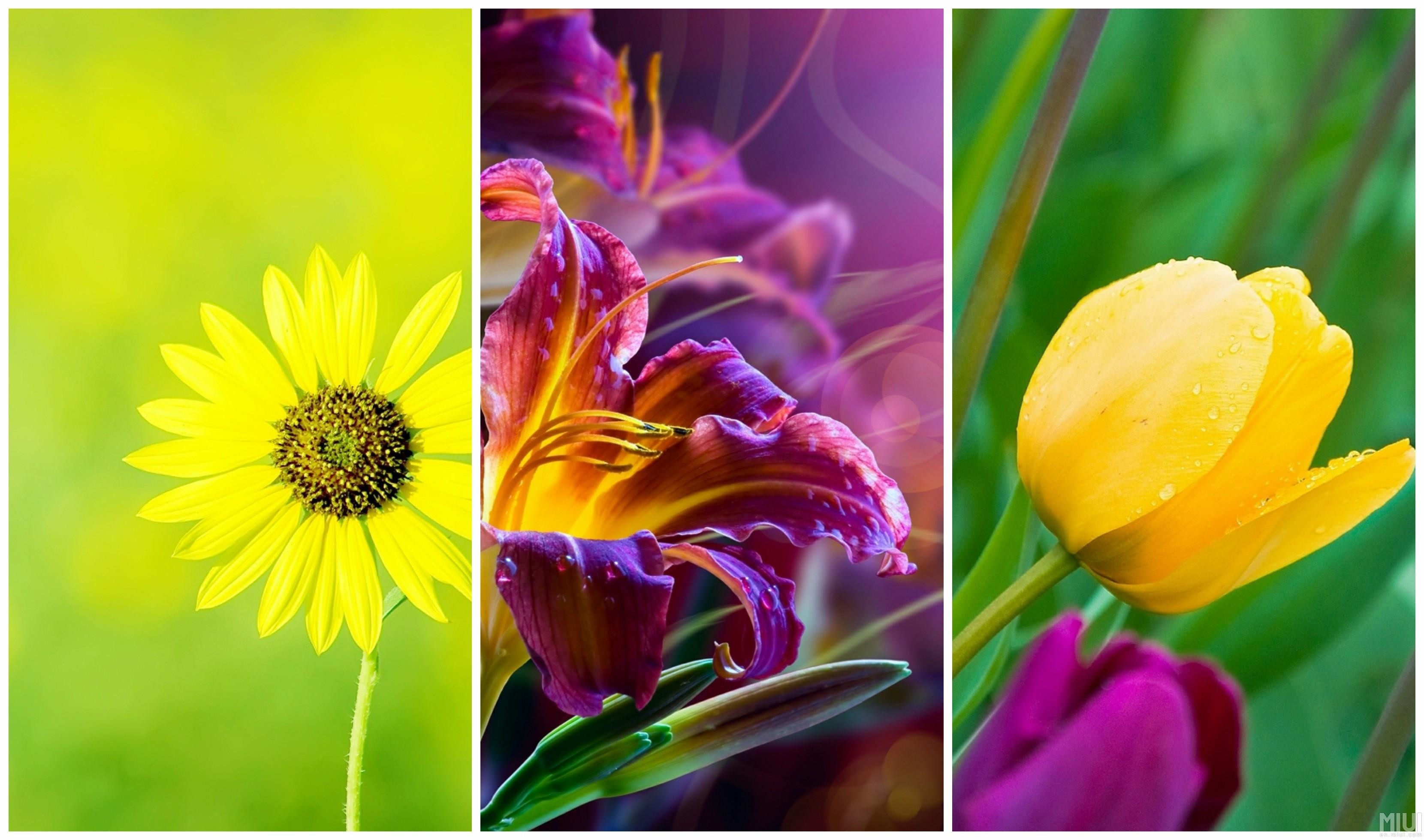 Full Hd Flower Wallpaper For Mobile - Full Screen Flower Wallpaper Hd - HD Wallpaper