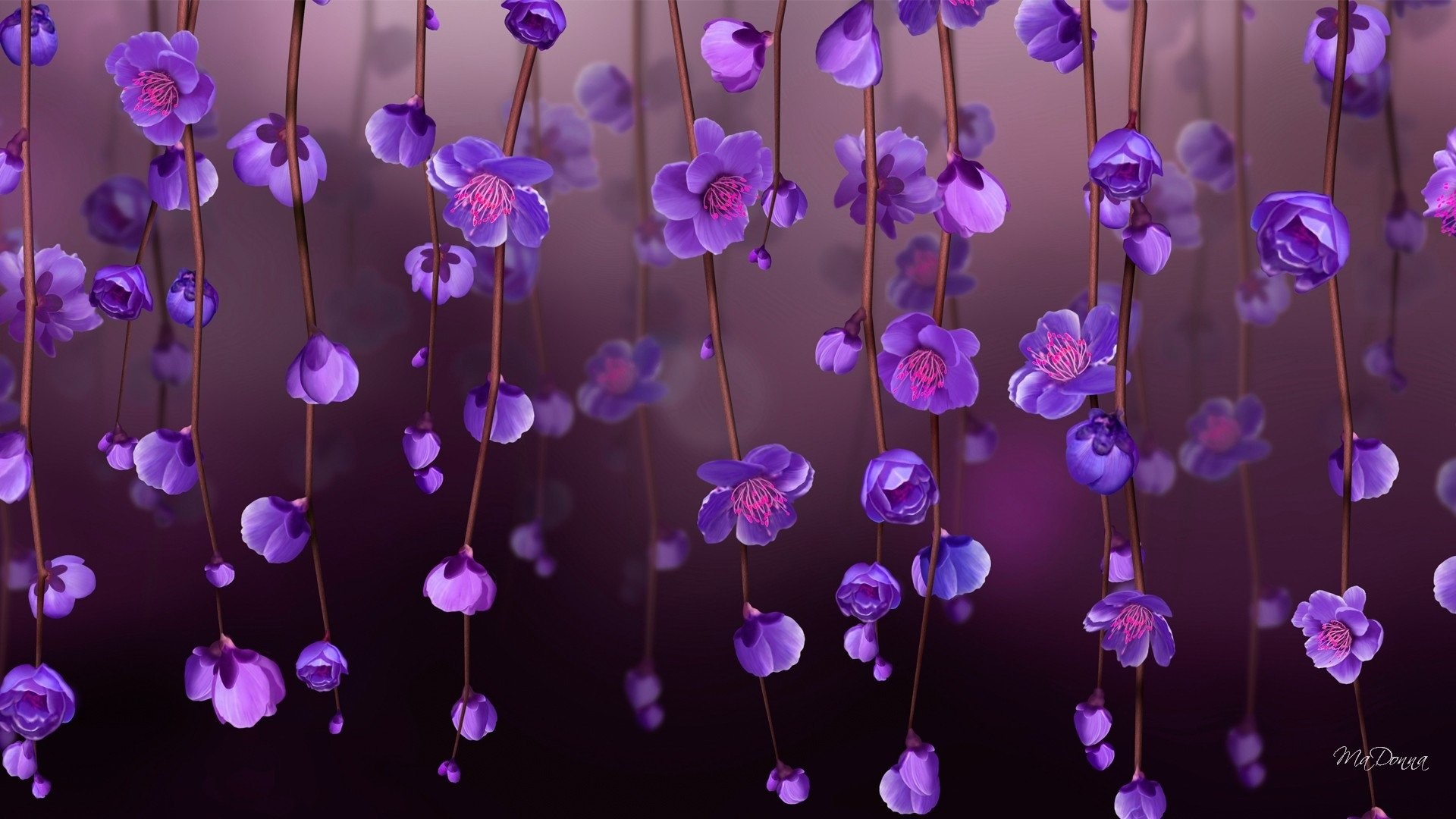 Flower Purple Flower - Desktop Wallpaper Flower Hd - HD Wallpaper