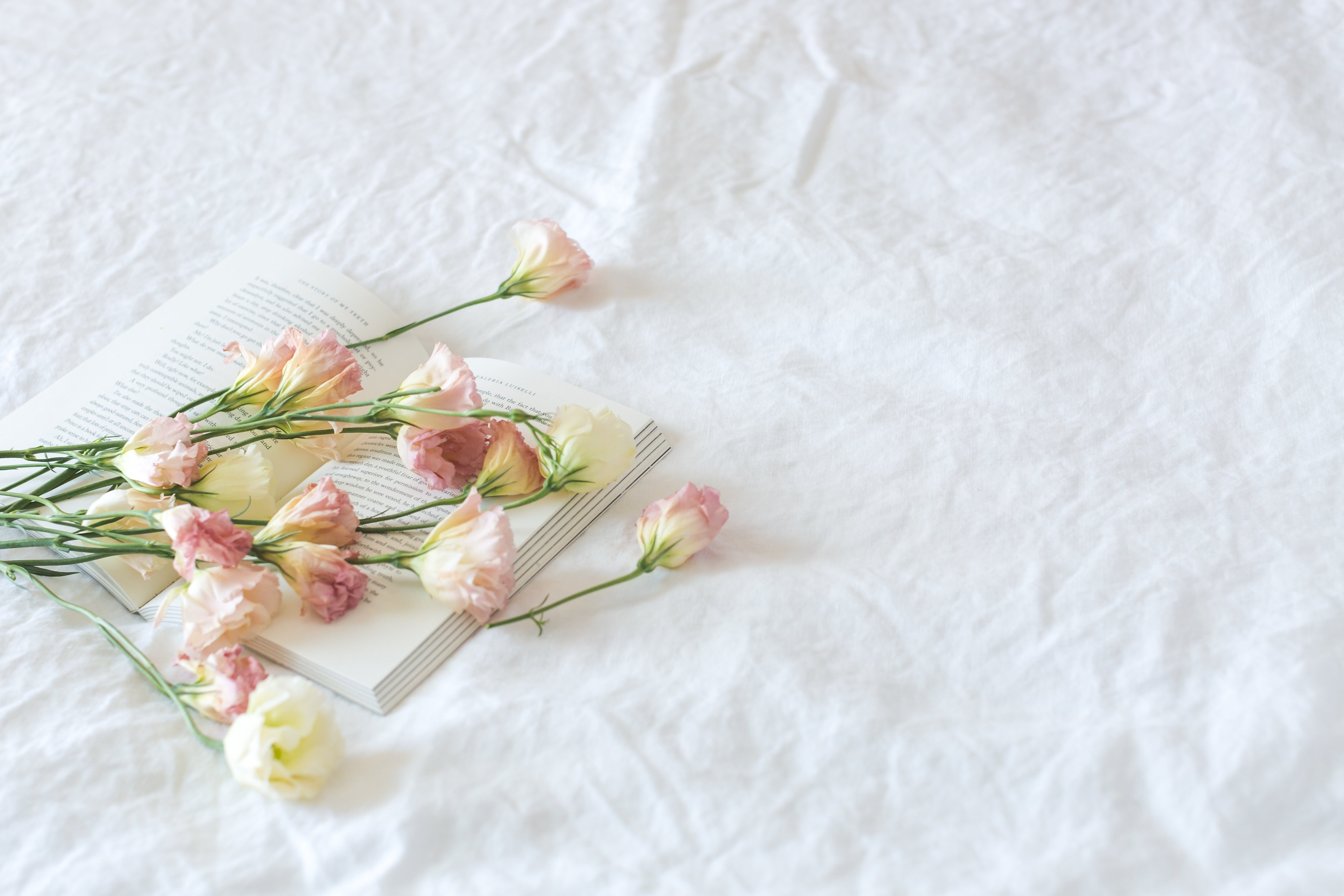 Rose Flower Scattered On The Book, Several Flowers - Happy Friendship Day With Flowers - HD Wallpaper