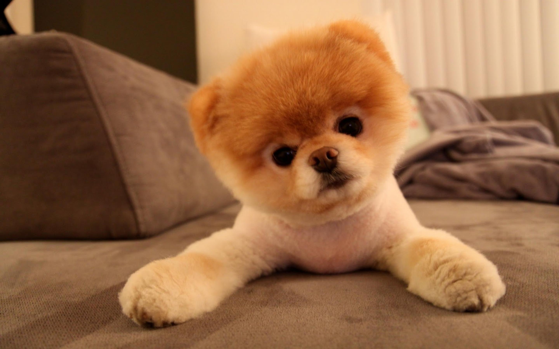 Cute Dog Wallpaper Hd On Wallpaper 1080p Hd Cutest Dog In The World 2017 2880x1800 Wallpaper Teahub Io