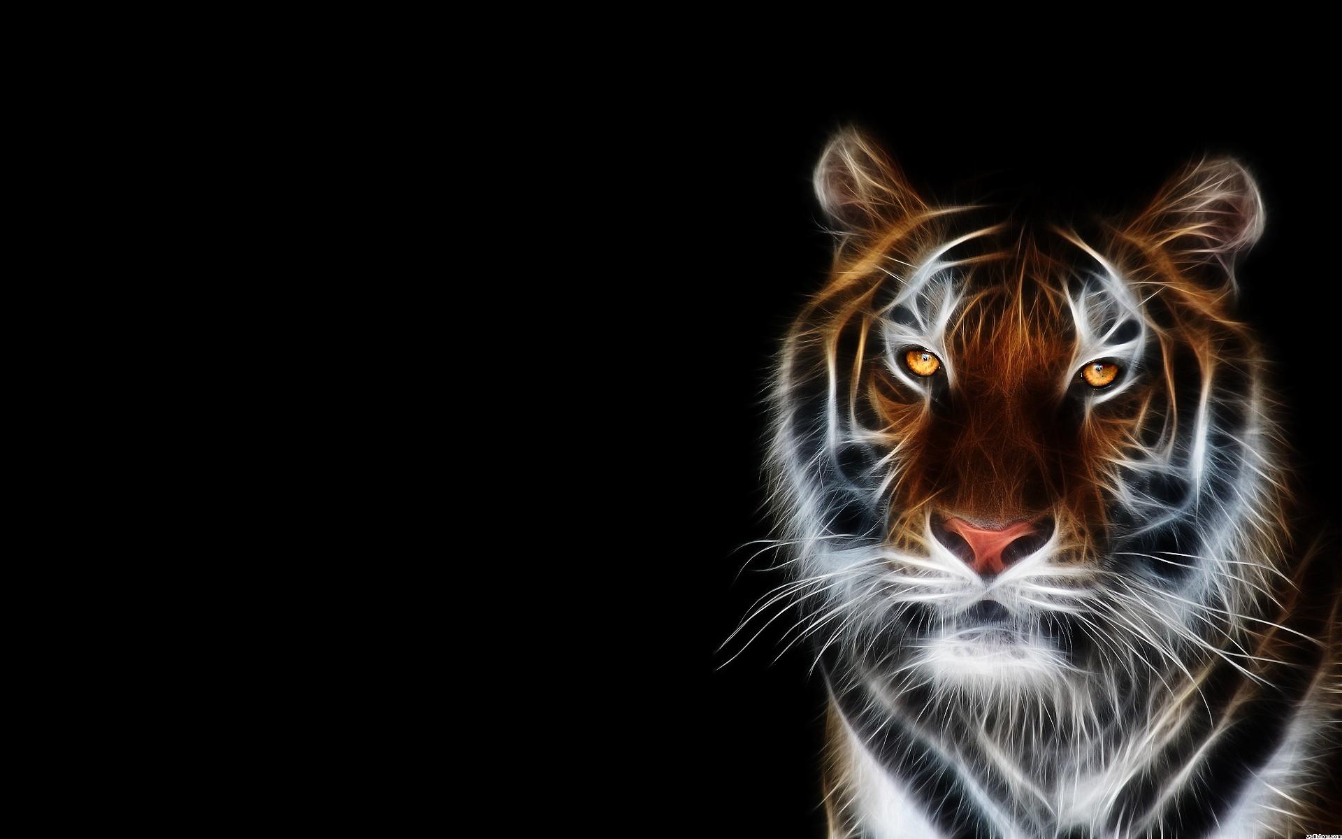 Beautiful Tiger Wallpaper Tiger Background Image Hd 1920x1200 Wallpaper Teahub Io