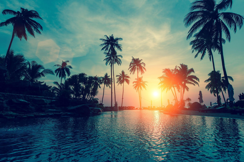 Wallpaper Sunset, Palm Trees, Tropical Beach, Hd, Nature, - Beach Sunset Palm Trees - HD Wallpaper