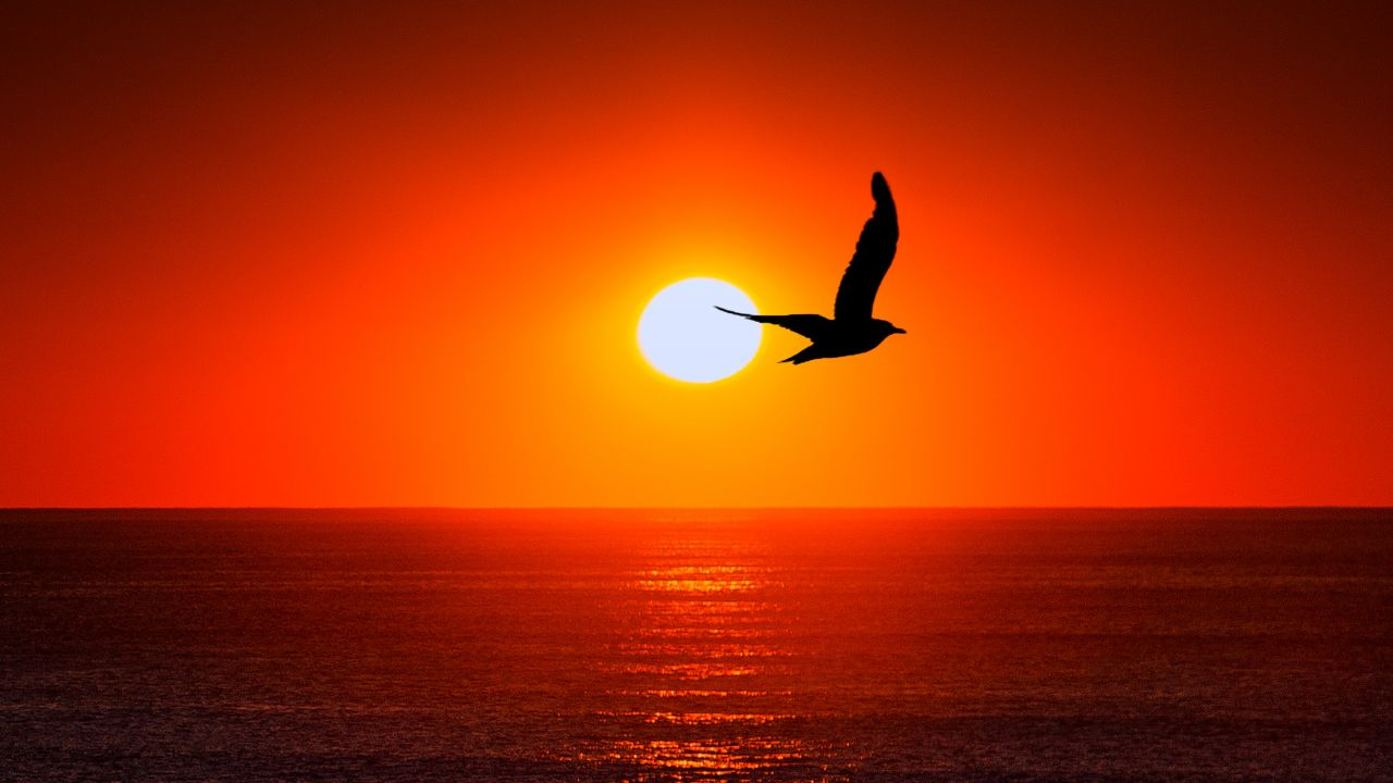 Sea With Bird And Sunset - HD Wallpaper