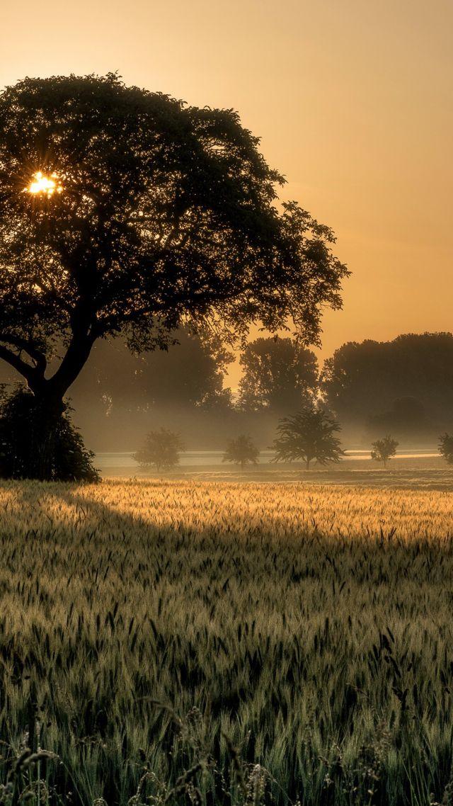 Sunset, Tree, Field, 4k - Sunset Tree - HD Wallpaper
