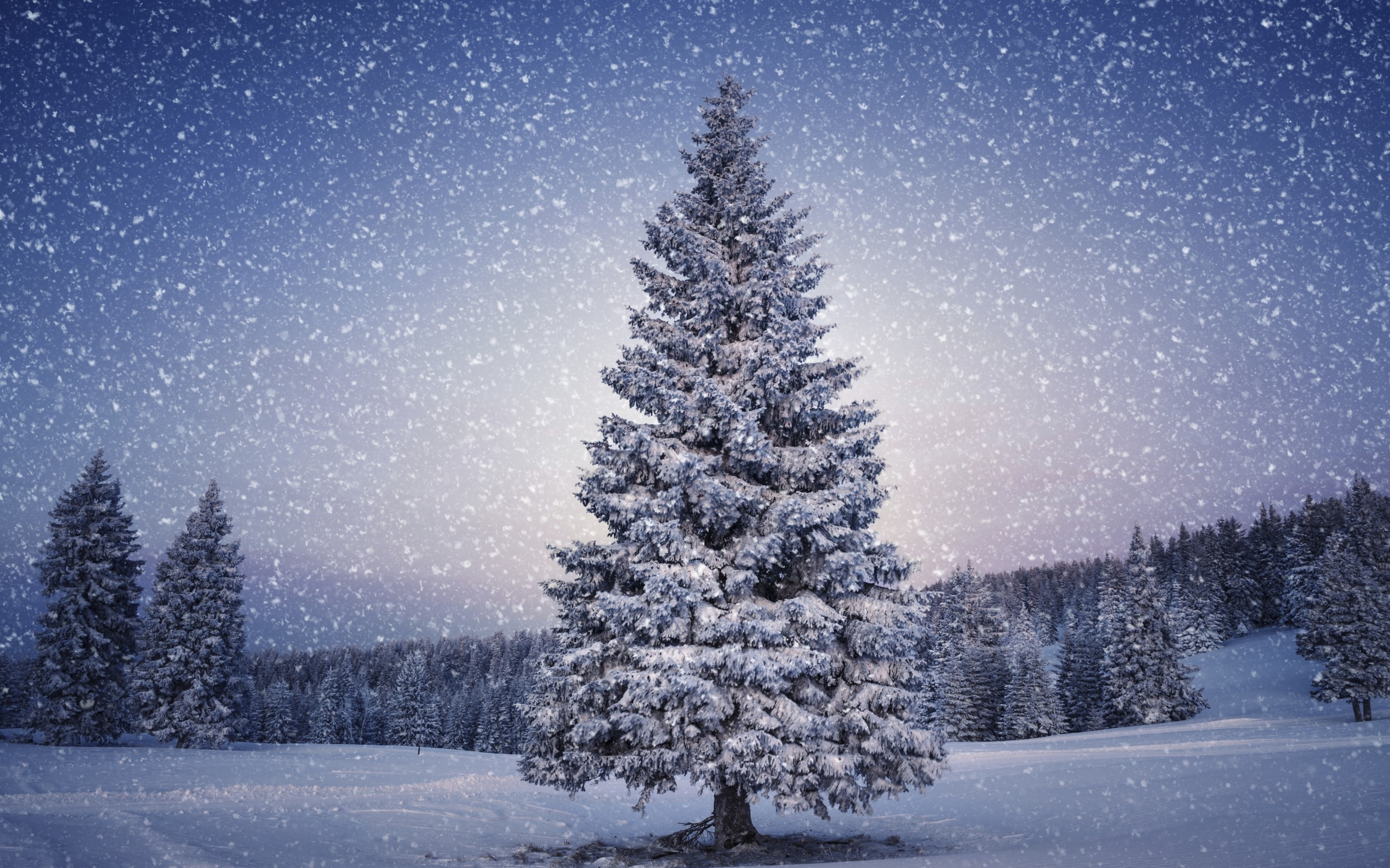 Christmas Tree Winter Wallpapers - Snow Christmas Tree Background - HD Wallpaper