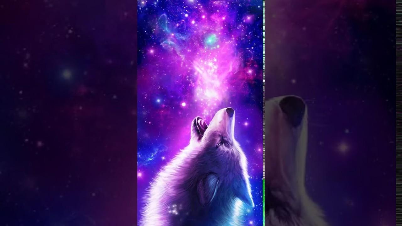 Galaxy Cool Wolf Backgrounds 1280x720 Wallpaper Teahub Io
