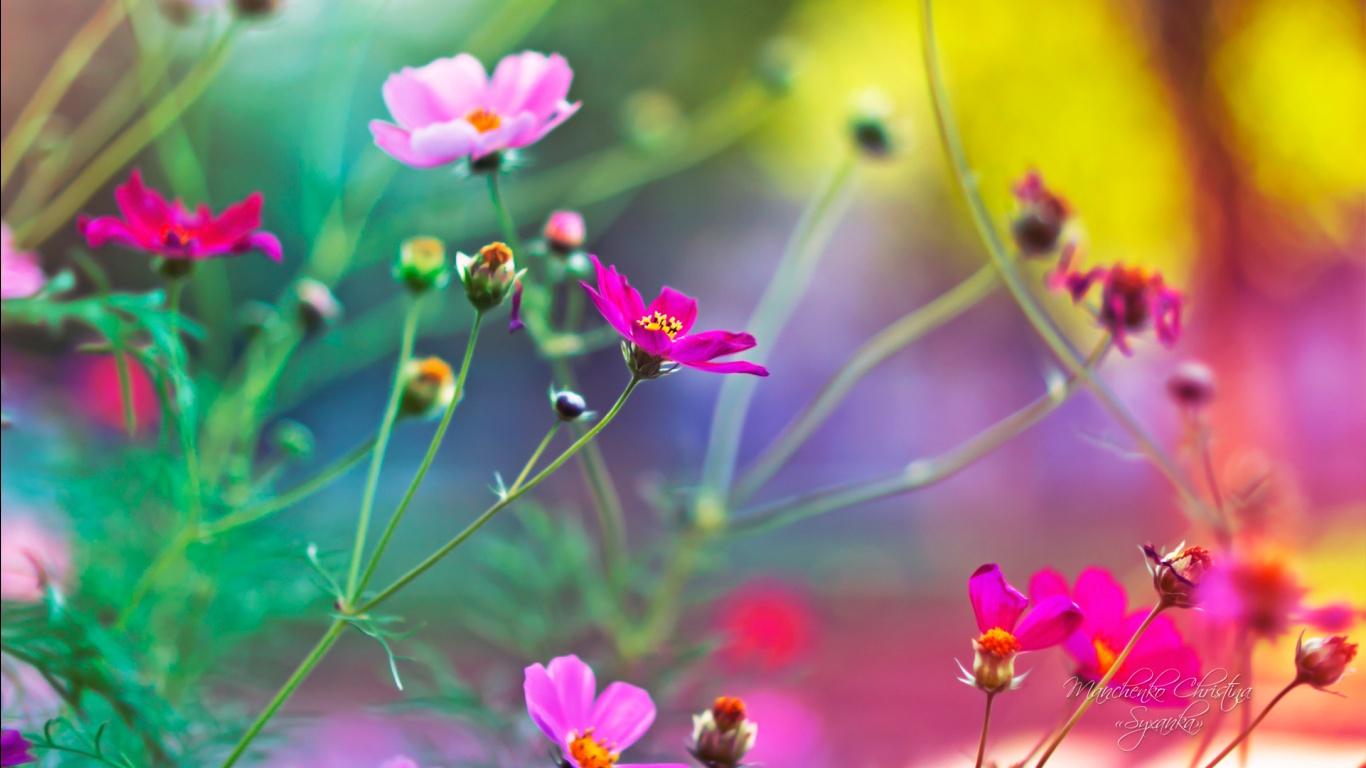 Best Ideas About Desktop Wallpaper Free Download On Flower Hd 1366x768 Wallpaper Teahub Io